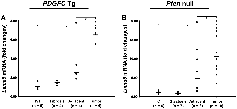 Up-regulation of laminin α5 mRNA in <i>PDGFC</i> Tg and <i>Pten</i> null tumors.