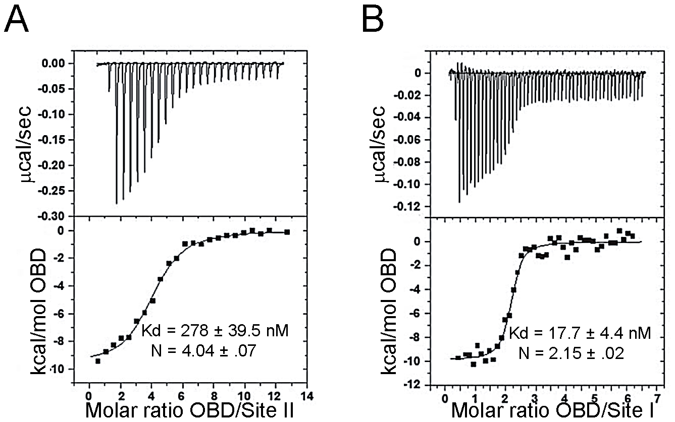 Determining the affinity of the JCV OBD for oligonucleotides containing the Site II and Site I regions of the viral origin.