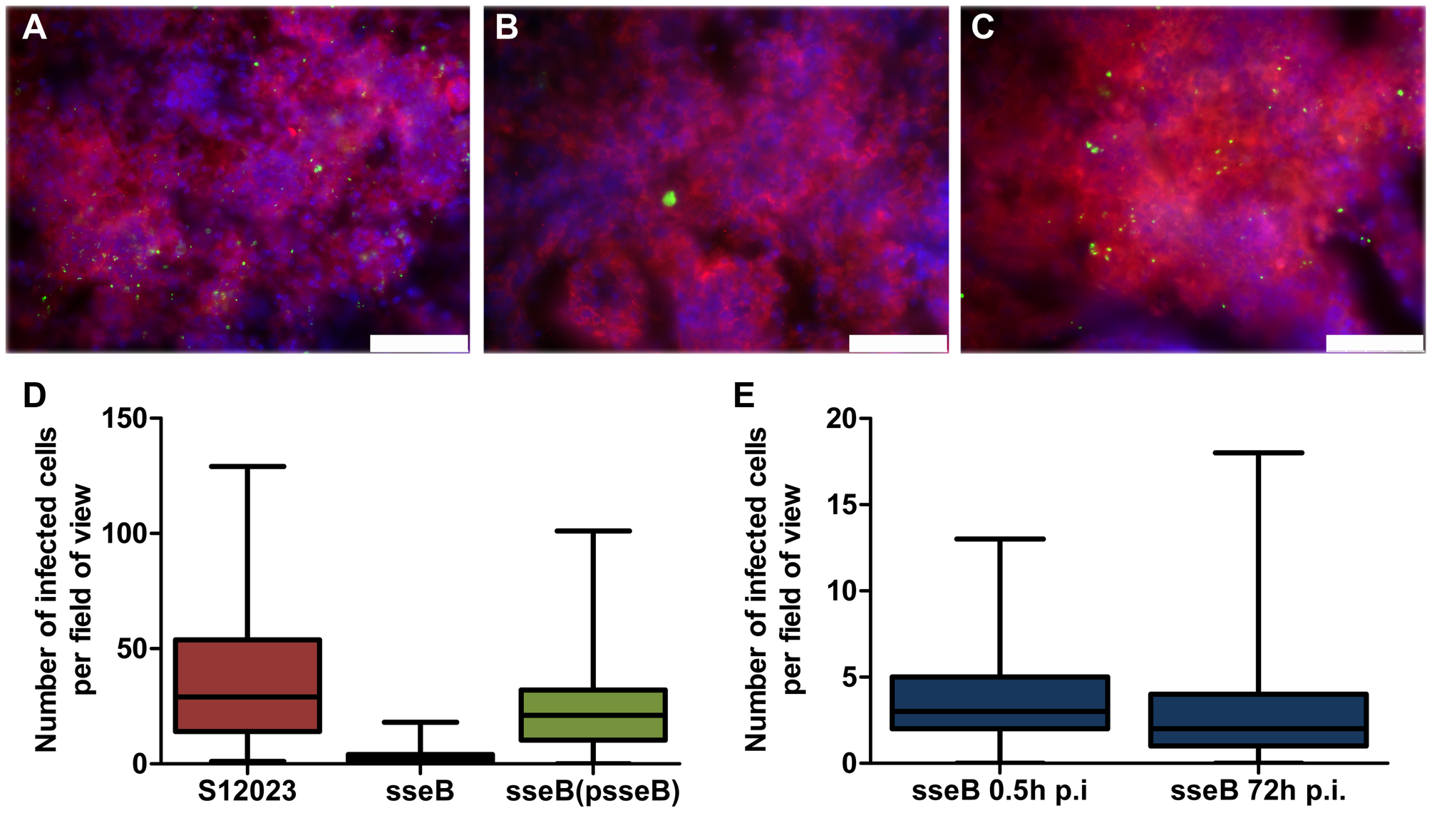 SPI-2 T3SS mutants are present in far fewer infected foci per organ than the wild-type.