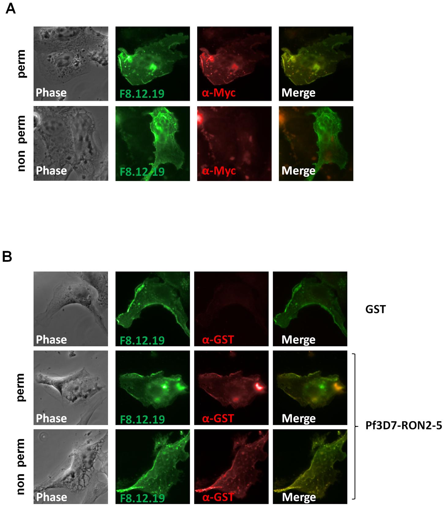 RON2-AMA1 interaction is conserved in <i>P. falciparum</i>.