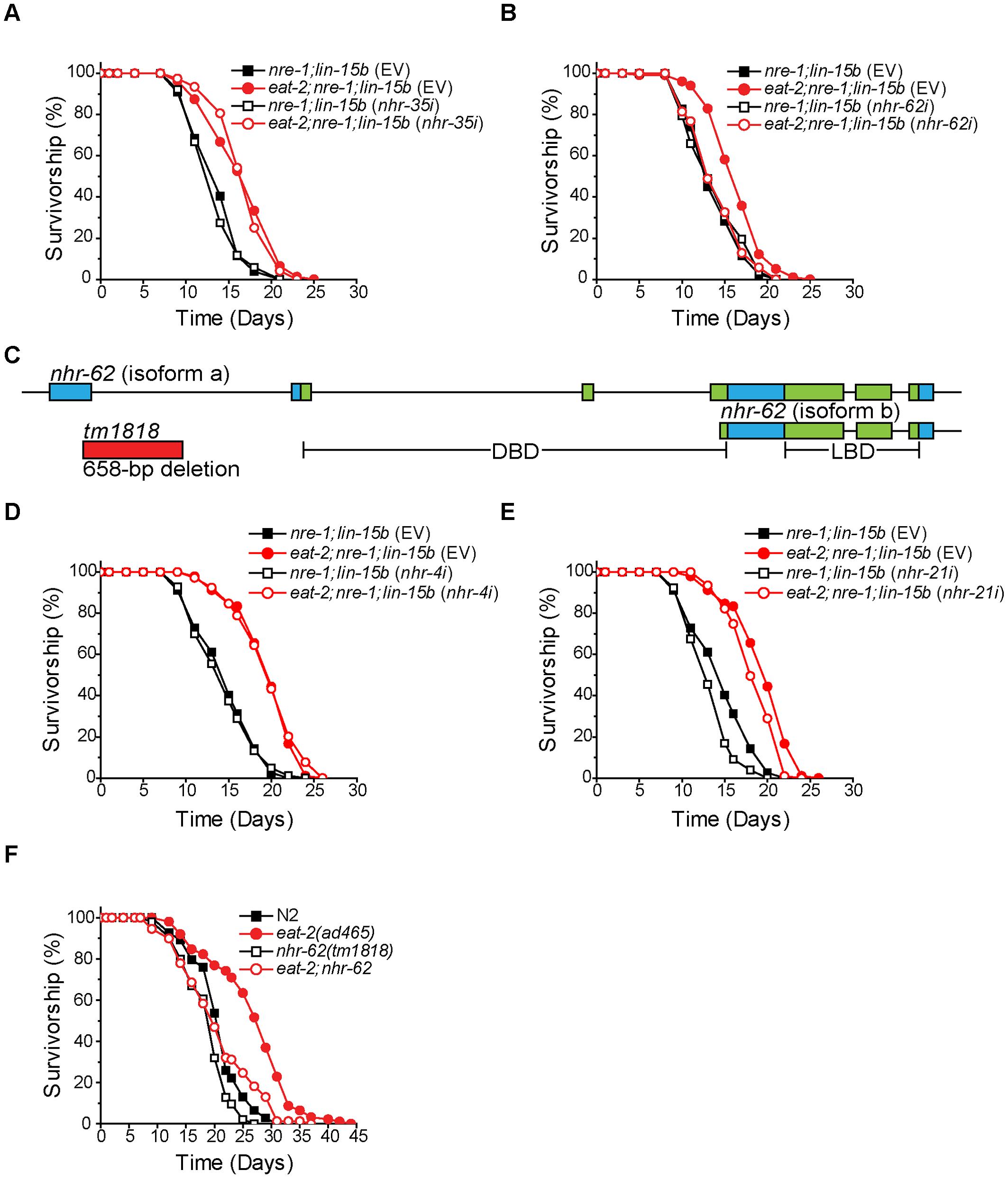 <i>nhr-62</i> mediates the longevity response to dietary restriction.