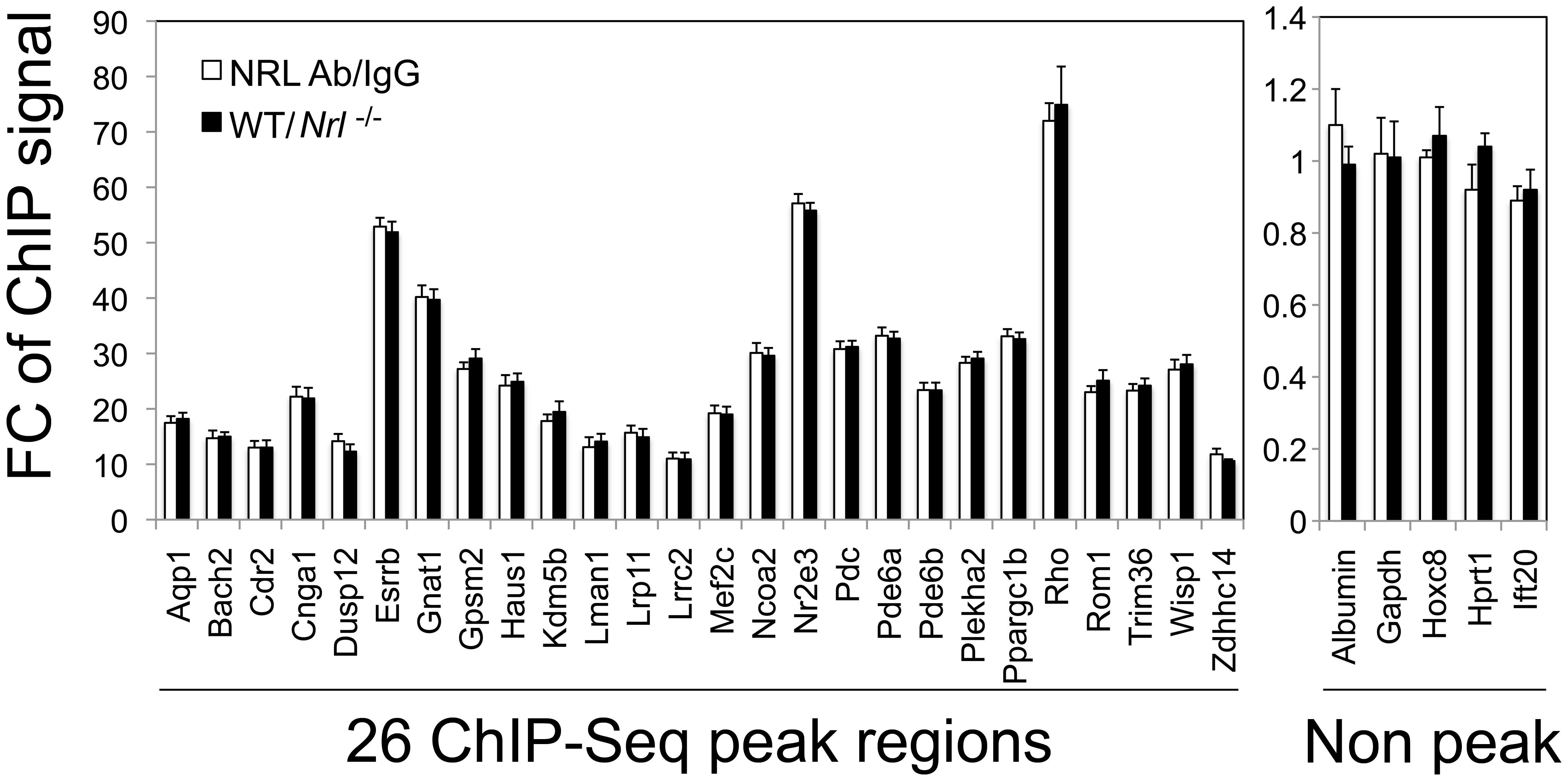 Validation of NRL binding to corresponding peak regions by ChIP–qPCR.