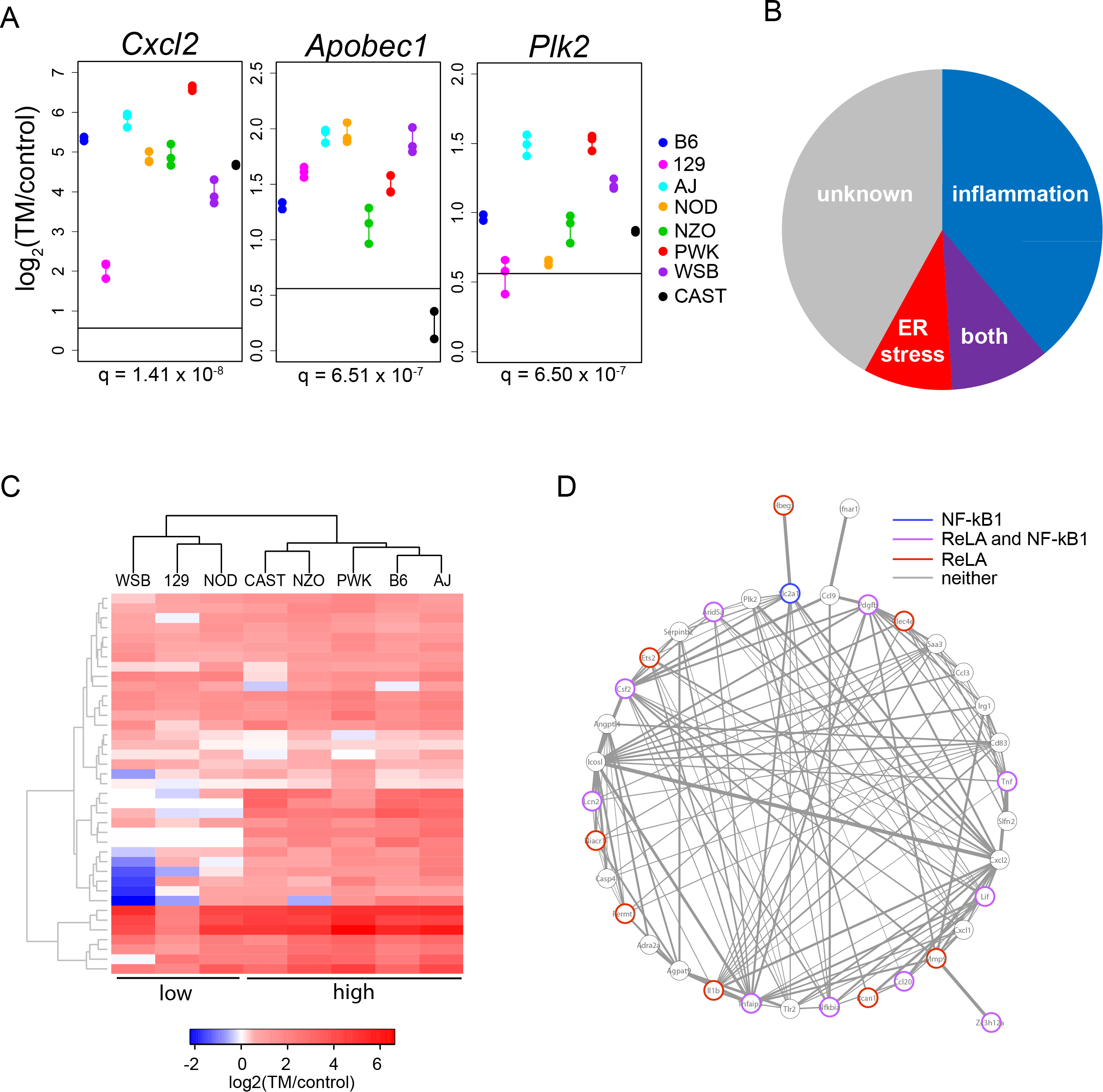 ER stress-induced genes with a strain effect are enriched for inflammation functions.