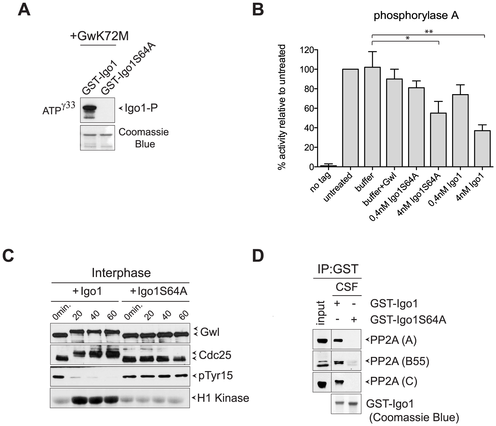Yeast Igo1 induces mitotic entry in <i>Xenopus</i> egg extracts.