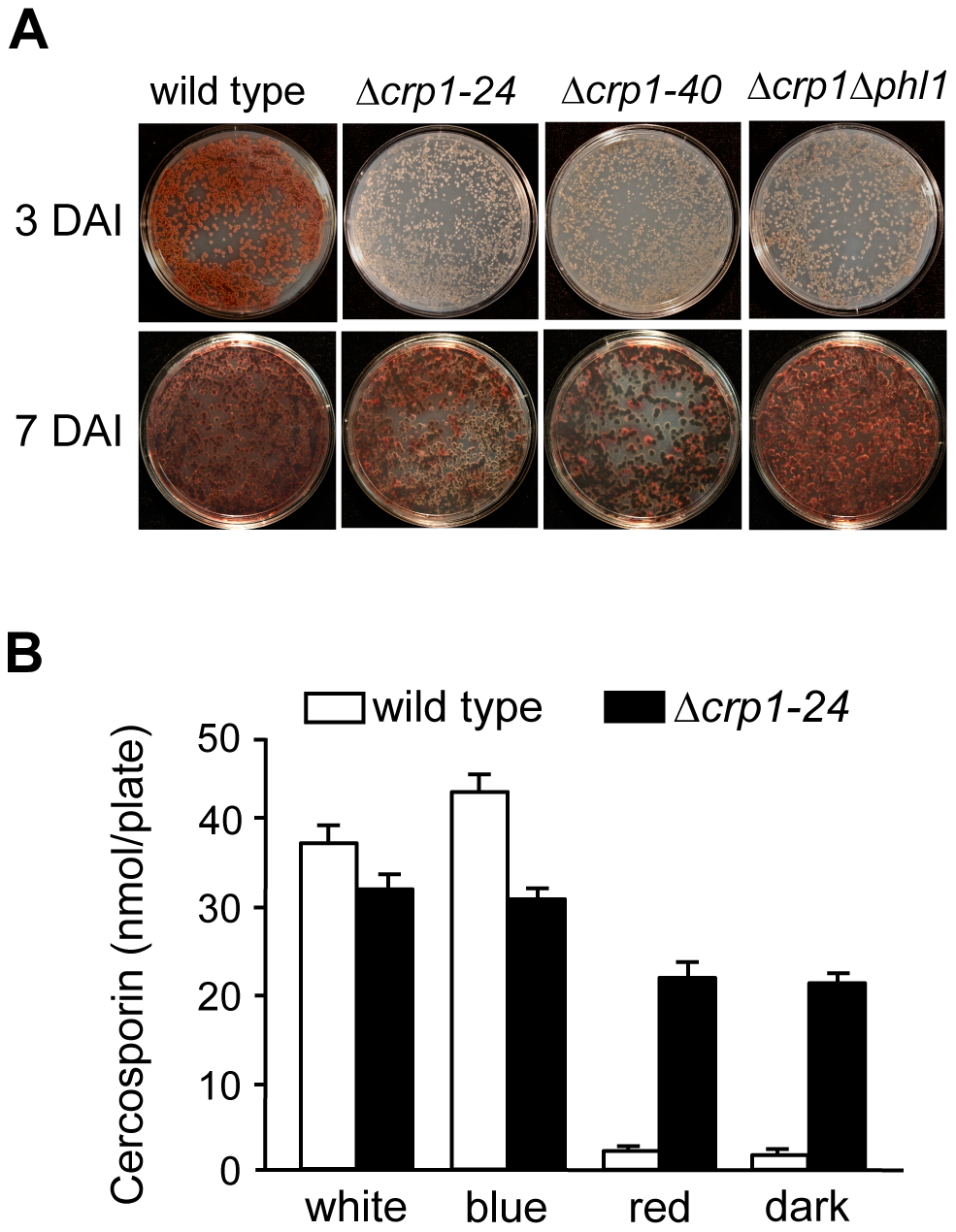 Disruption of <i>CRP1</i> affects cercosporin biosynthesis.