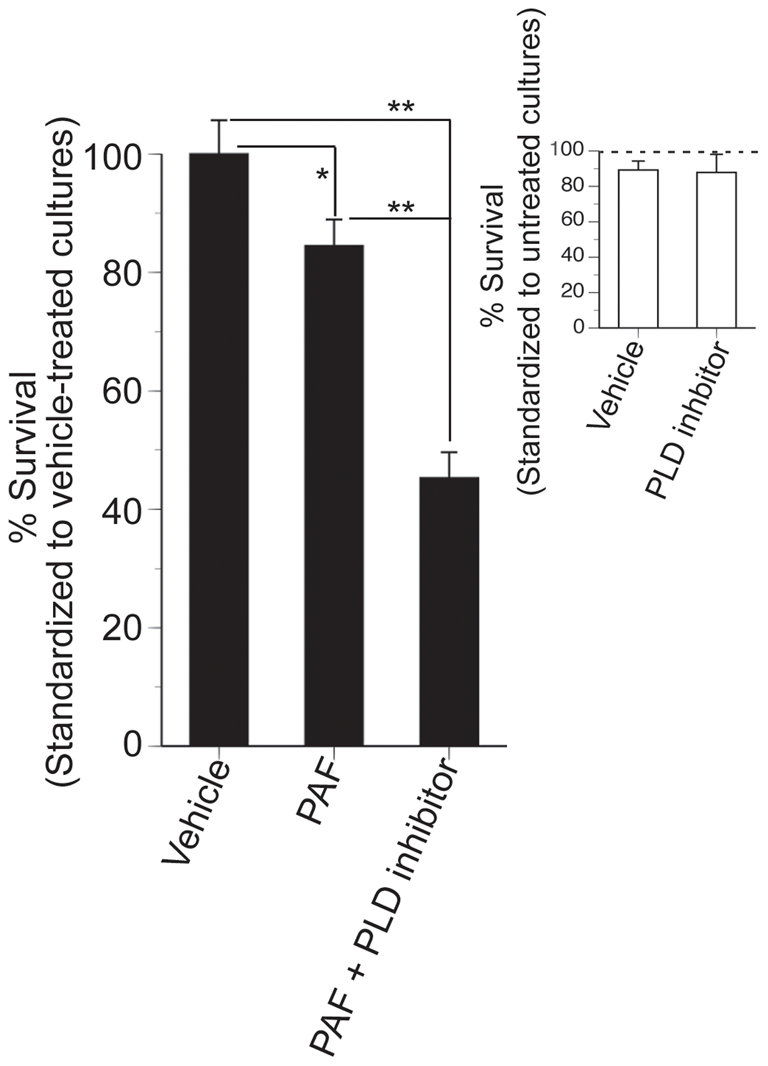 Inhibition of PLD reduces the survival of N2a cells treated with C16:0 PAF.