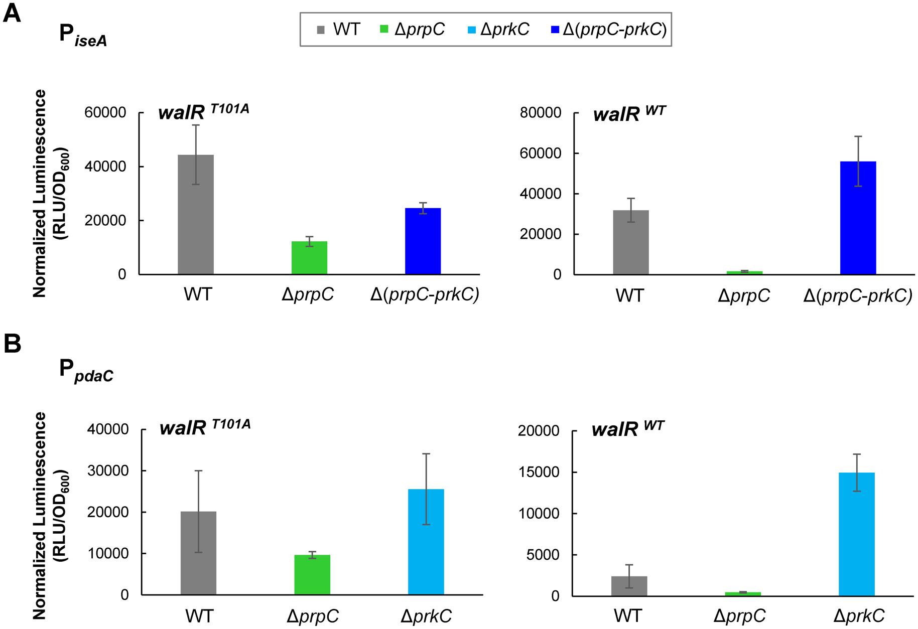 <i>iseA</i> and <i>pdaC</i> show reduced PrkC-dependent repression in a <i>walR</i><sup><i>T101A</i></sup> mutant background.