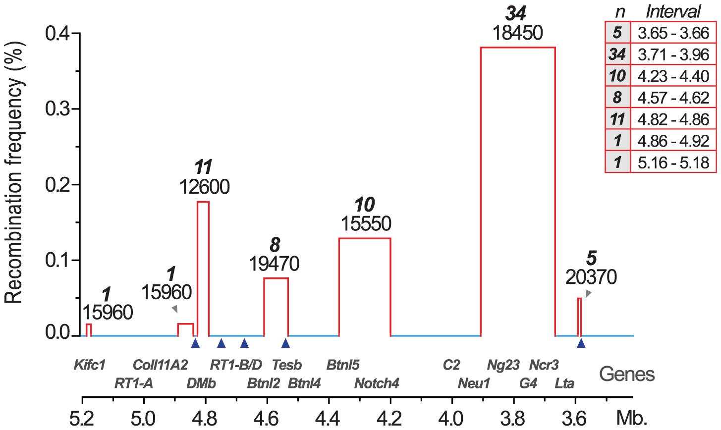 Recombination hotspots and haplotype blocks in the rat MHC.