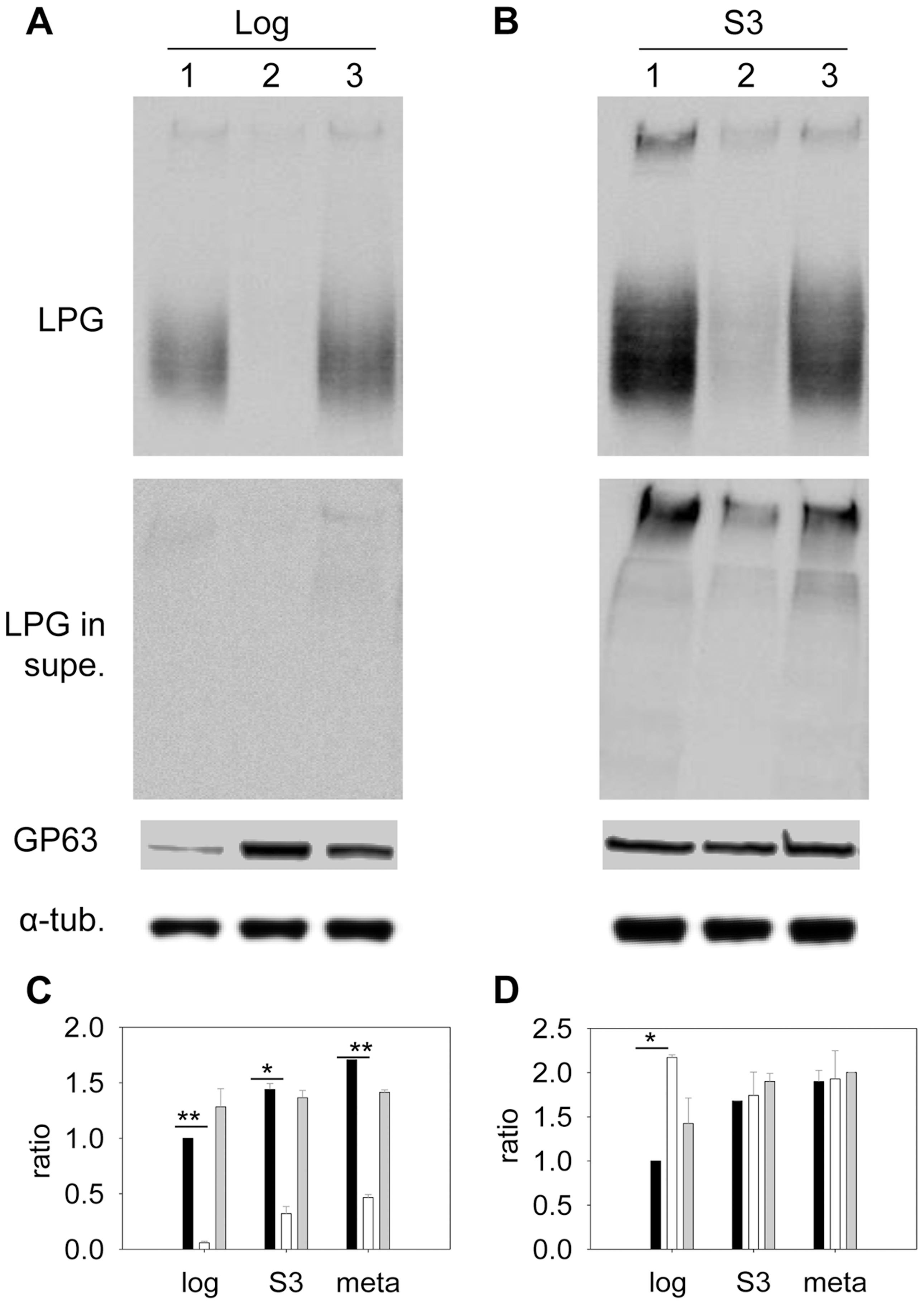 Altered expression of LPG and GP63 in <i>c14dm</i><sup>−</sup> mutants.