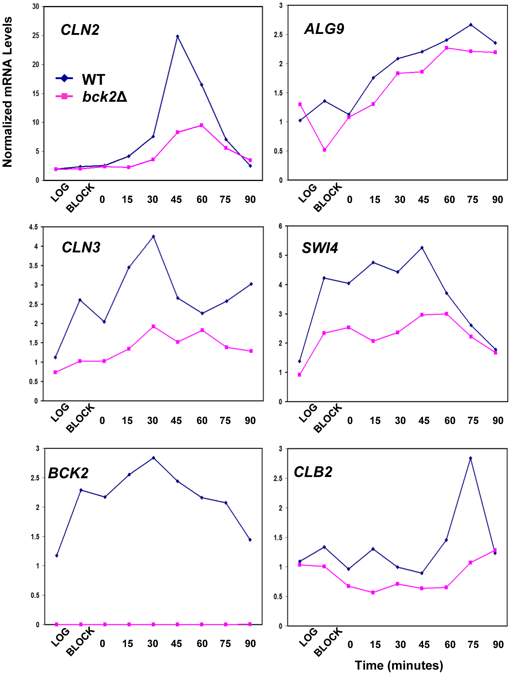 Effect of <i>BCK2</i> deletion on <i>CLN2</i>, <i>ALG9</i>, <i>CLN3</i>, <i>SWI4</i>, <i>BCK2</i>, and <i>CLB2</i> mRNA accumulation during the cell cycle.