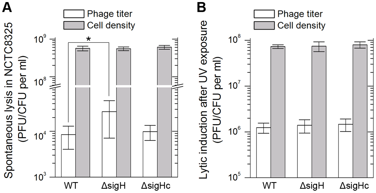 <i>SigH</i> deletion leads to an increase in spontaneous lysis.