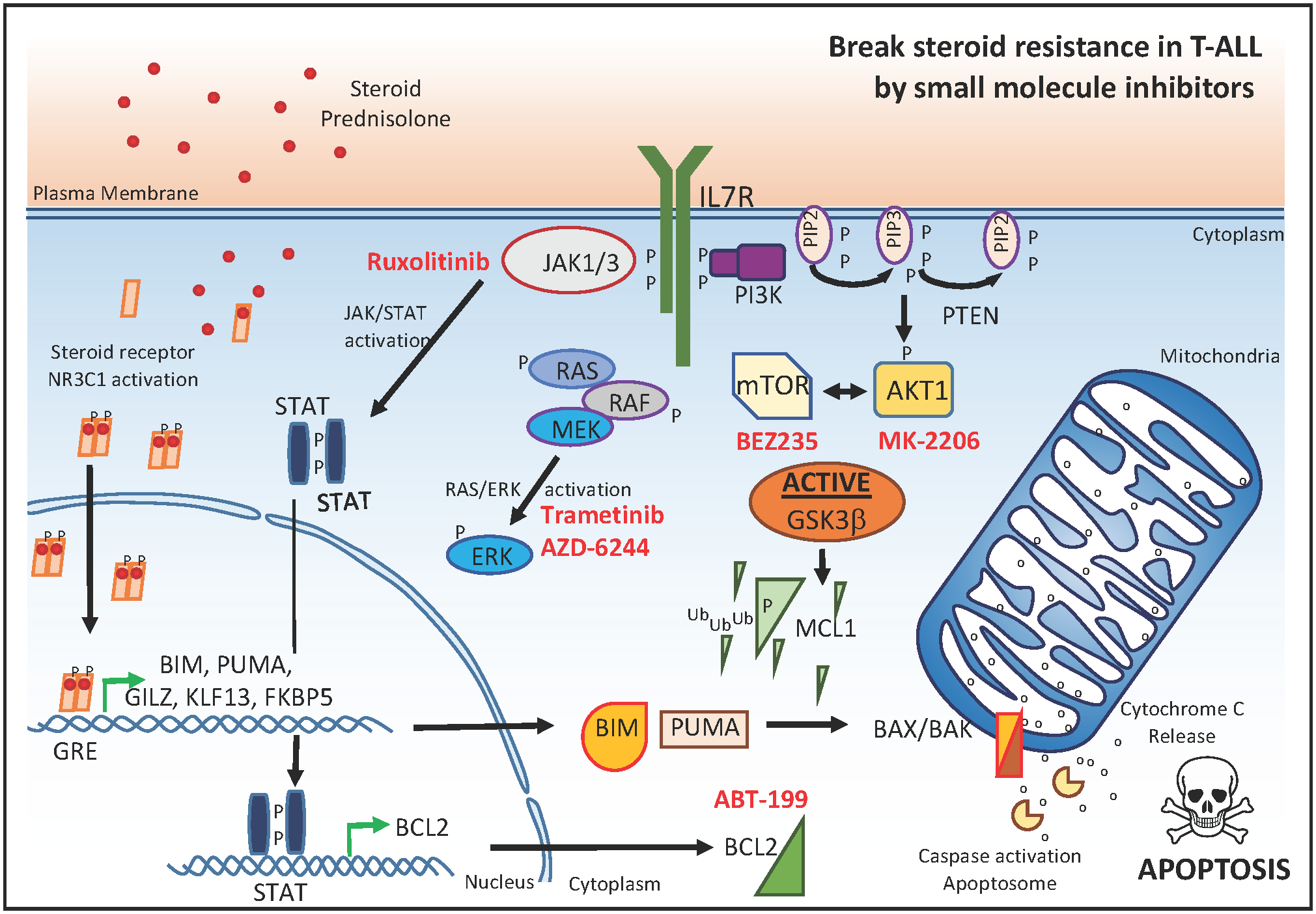 Small molecule inhibitors that reverse glucocorticoid resistance in T-ALL.