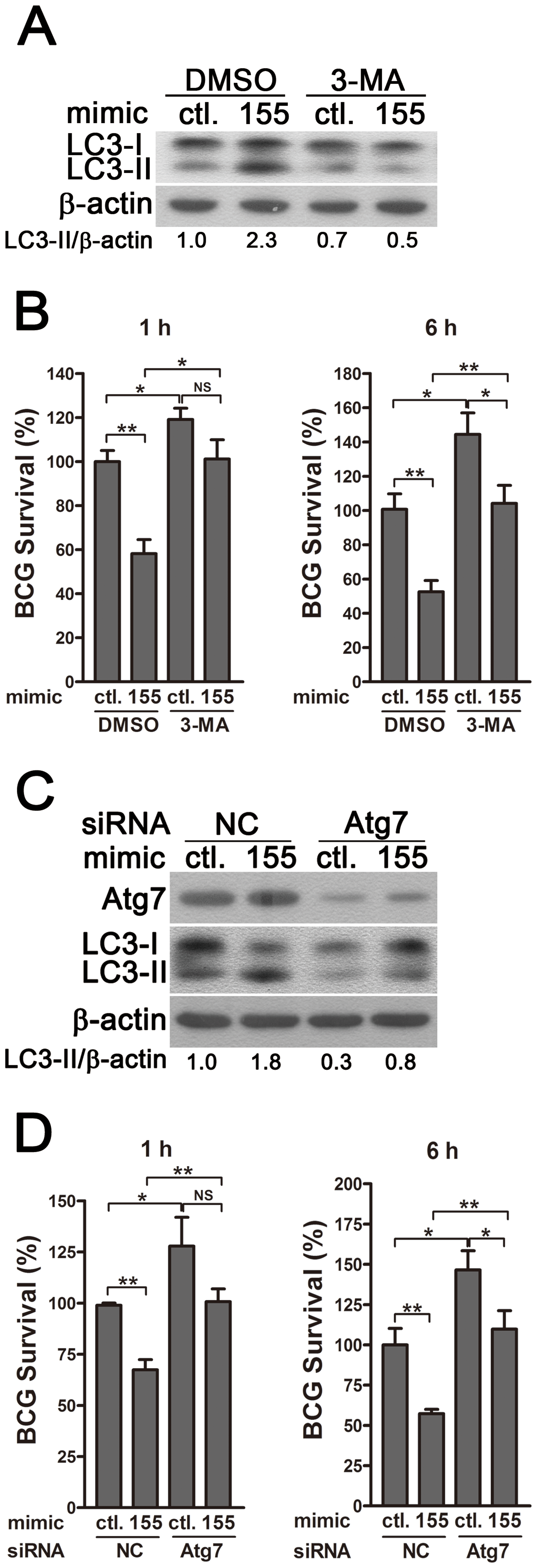 miR-155-induced autophagy promotes the elimination of intracellular mycobacteria.