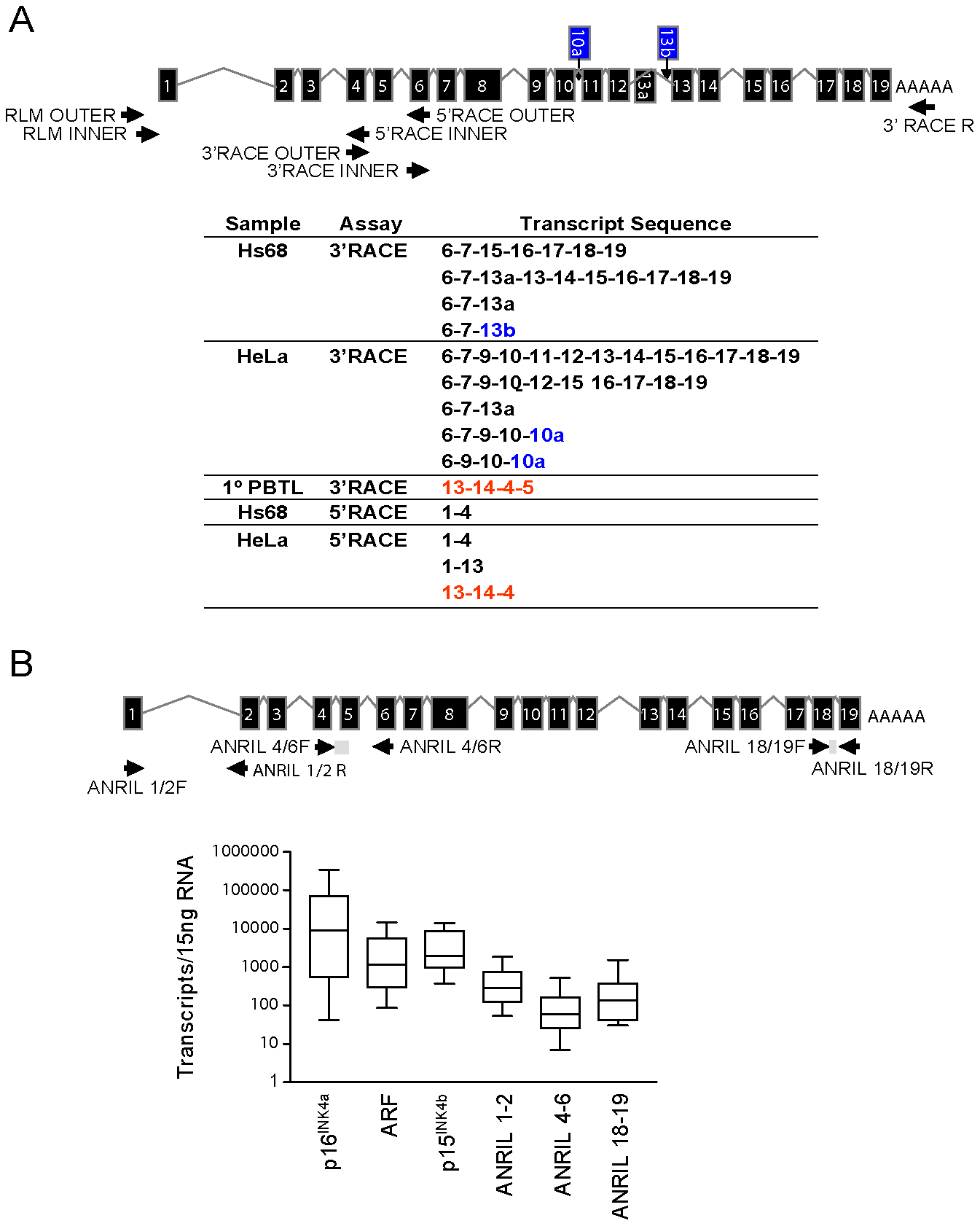 Identification and characterization of <i>ANRIL</i> splice variants.