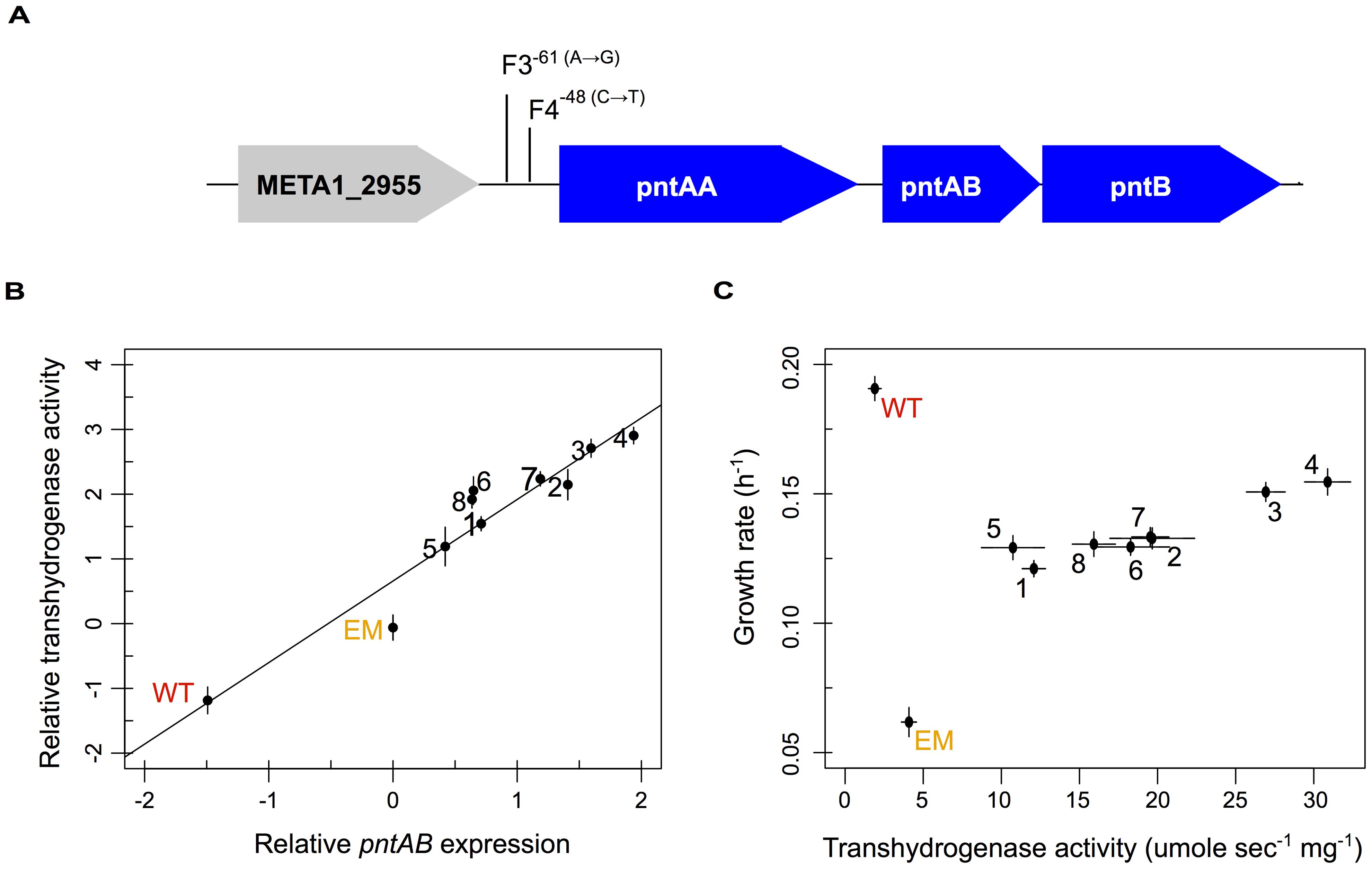 Multiple evolved mechanisms reinforce increased <i>pntAB</i> expression and transhydrogenase activity.