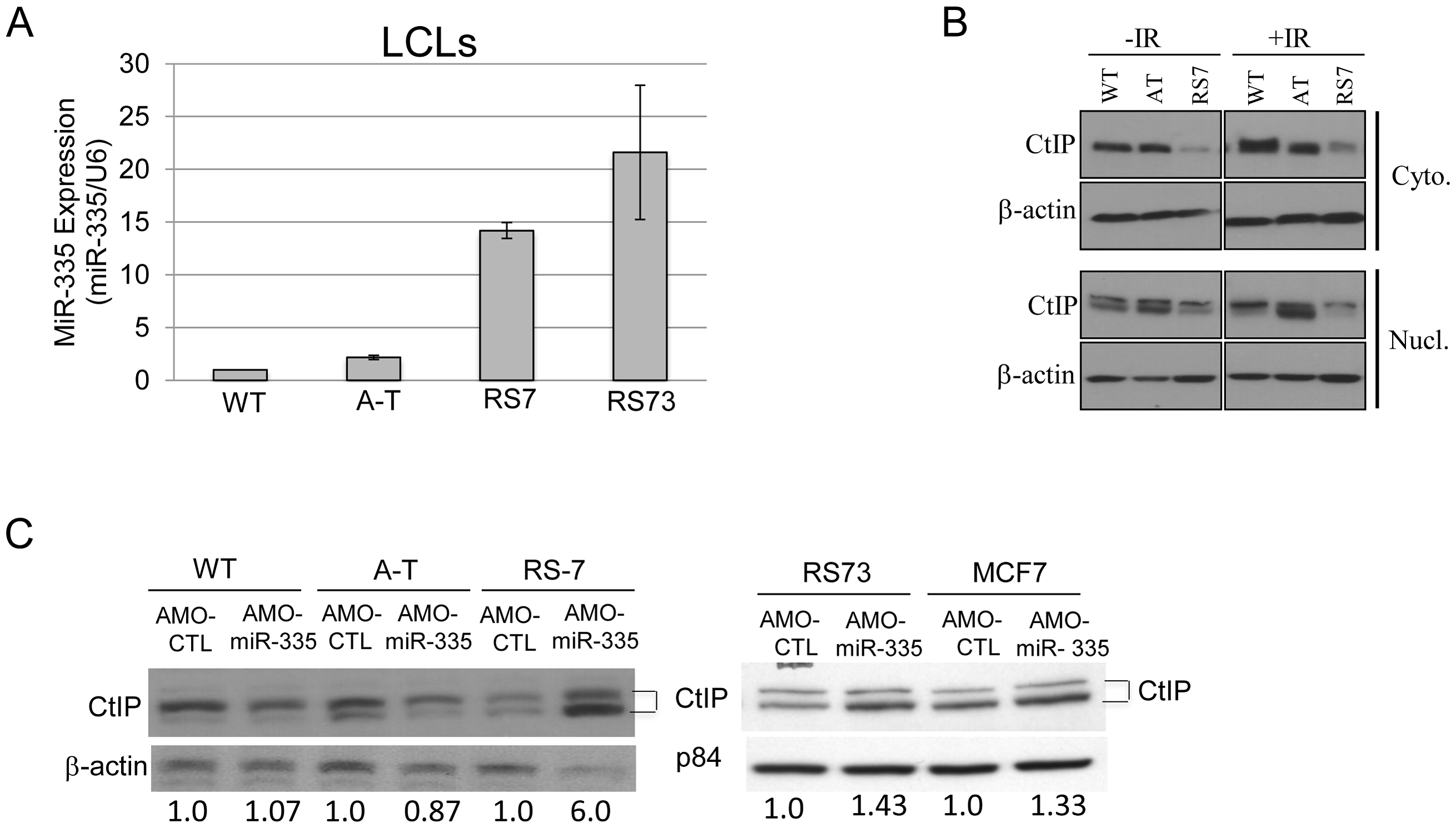 MiR-335 was constitutively overexpressed in RS7 and RS73 LCLs.