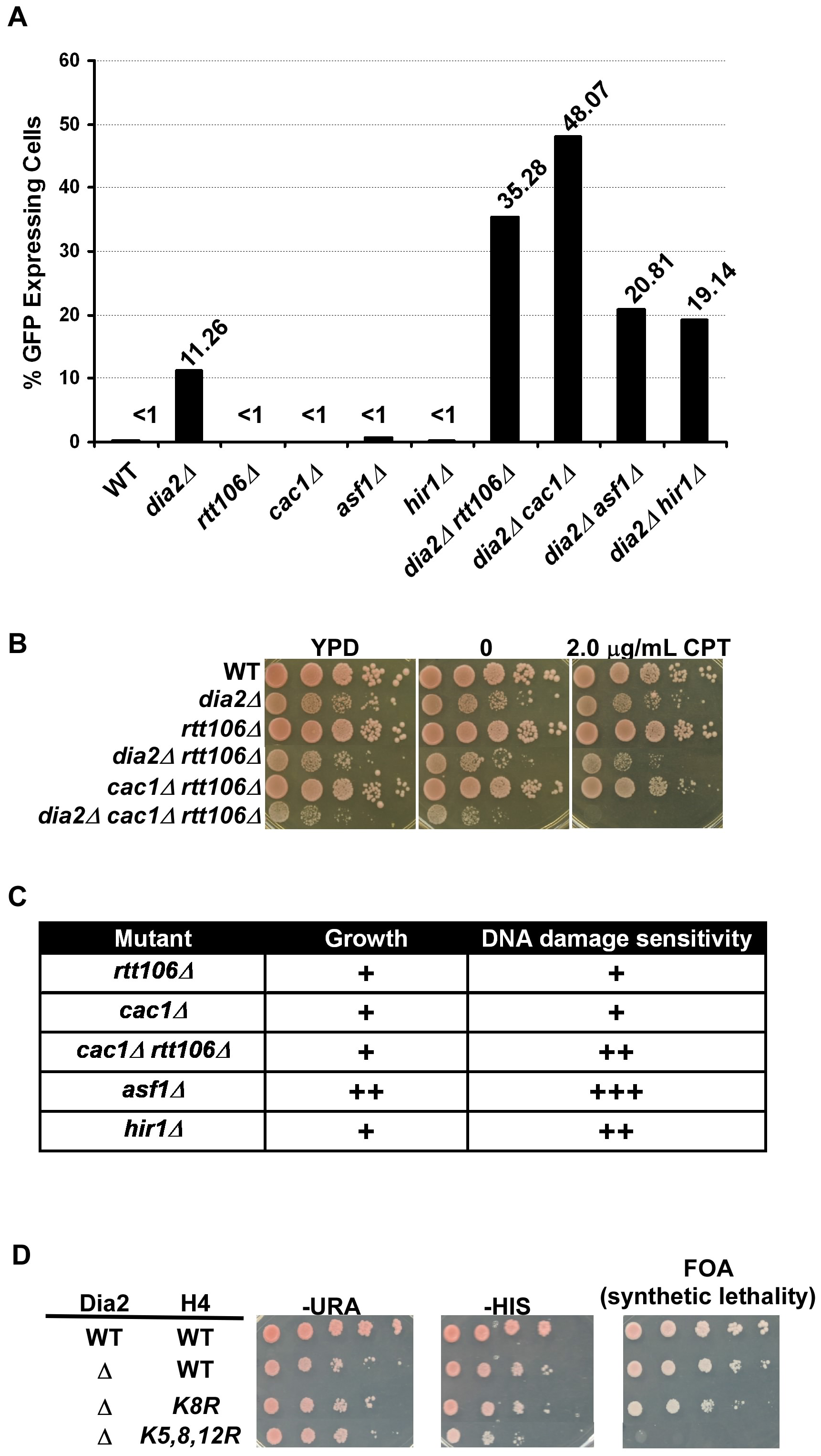 <i>DIA2</i> genetically interacts with genes encoding histone chaperones and histone H3–H4 lysine mutants with defects in nucleosome assembly.