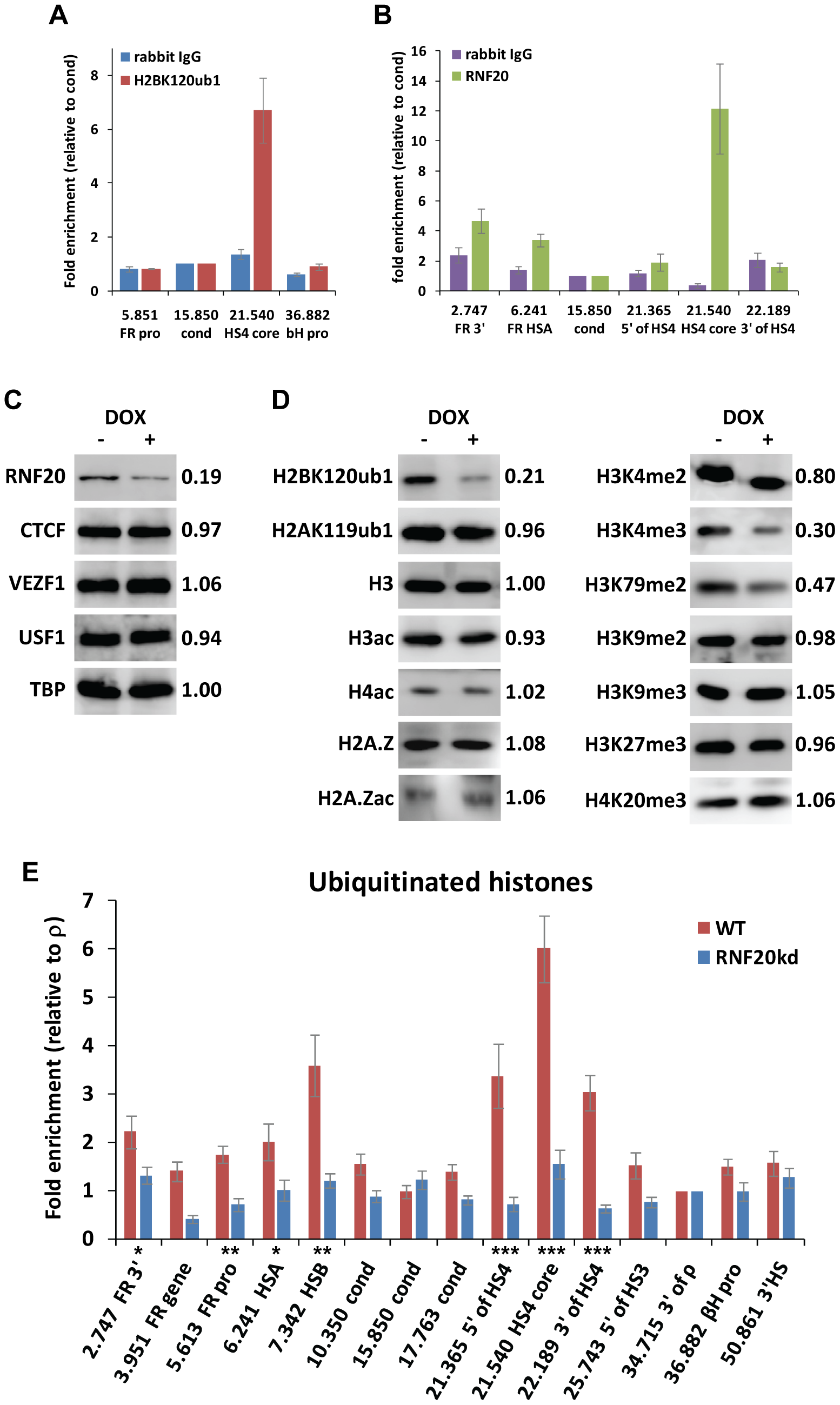 The ubiquitin ligase RNF20 mediates H2B ubiquitination at the HS4 insulator.