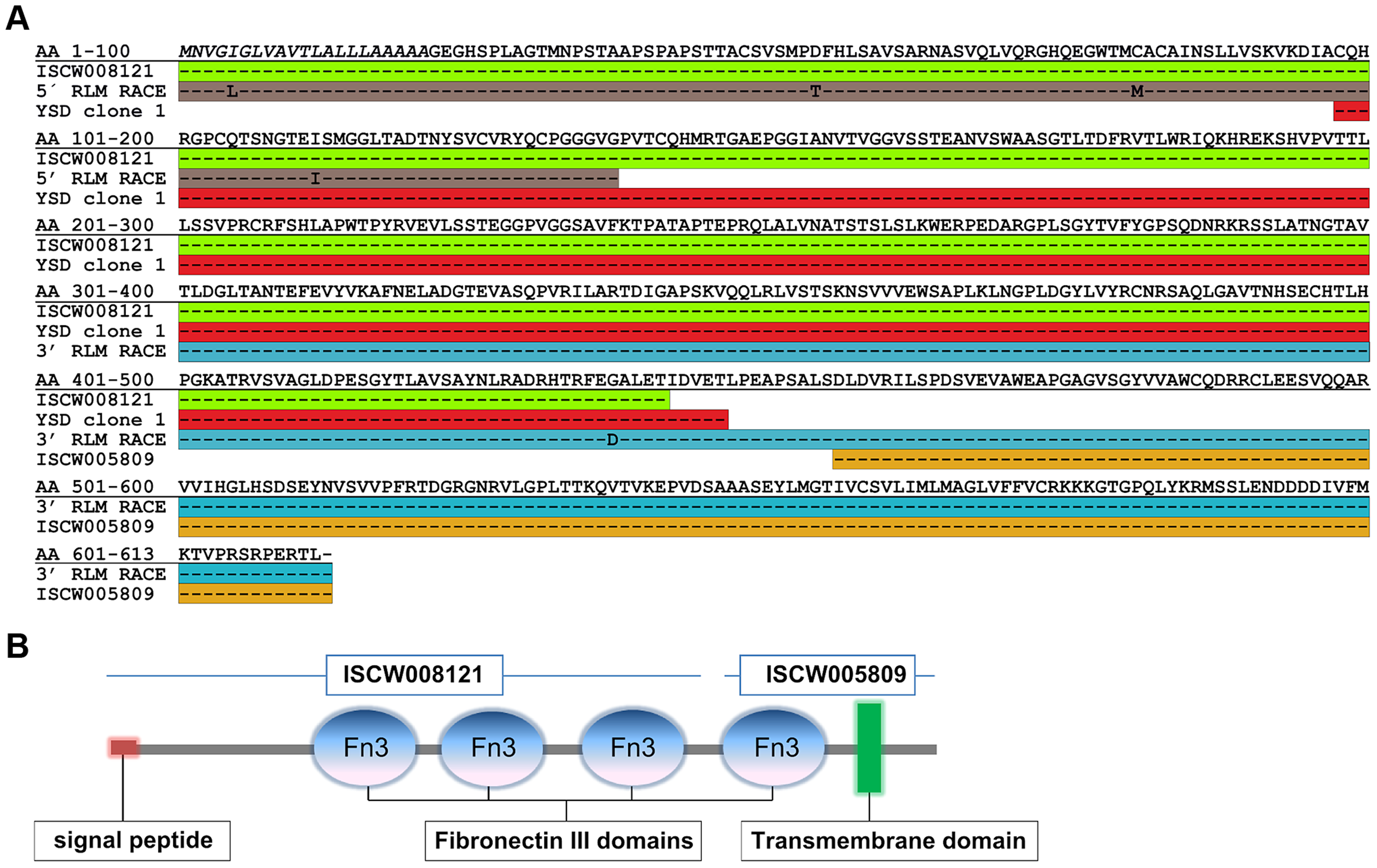 Full-length sequence of Ixofin3D (Genbank accession number KF709698).