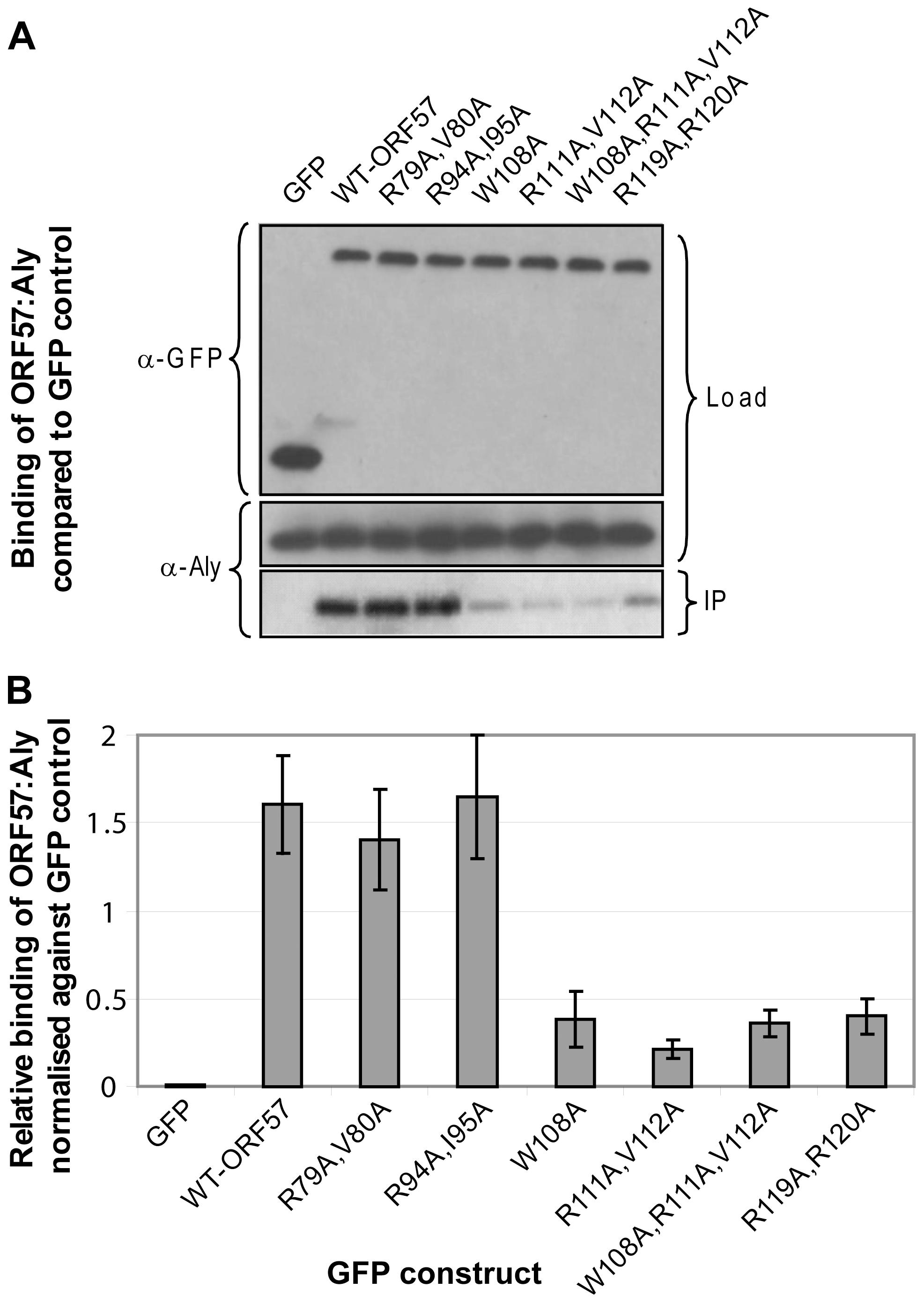 Functional importance of the identified REF binding site for the interaction of ORF57 with human Aly.