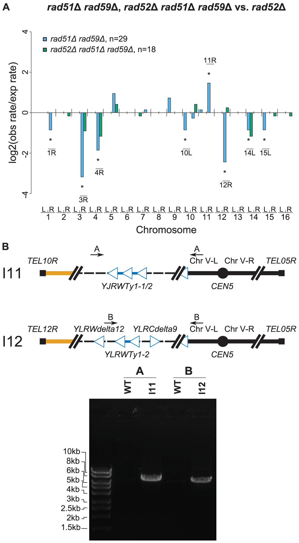 Further MLPA and PCR analyses of GCRs derived from recombination-deficient mutant strains.