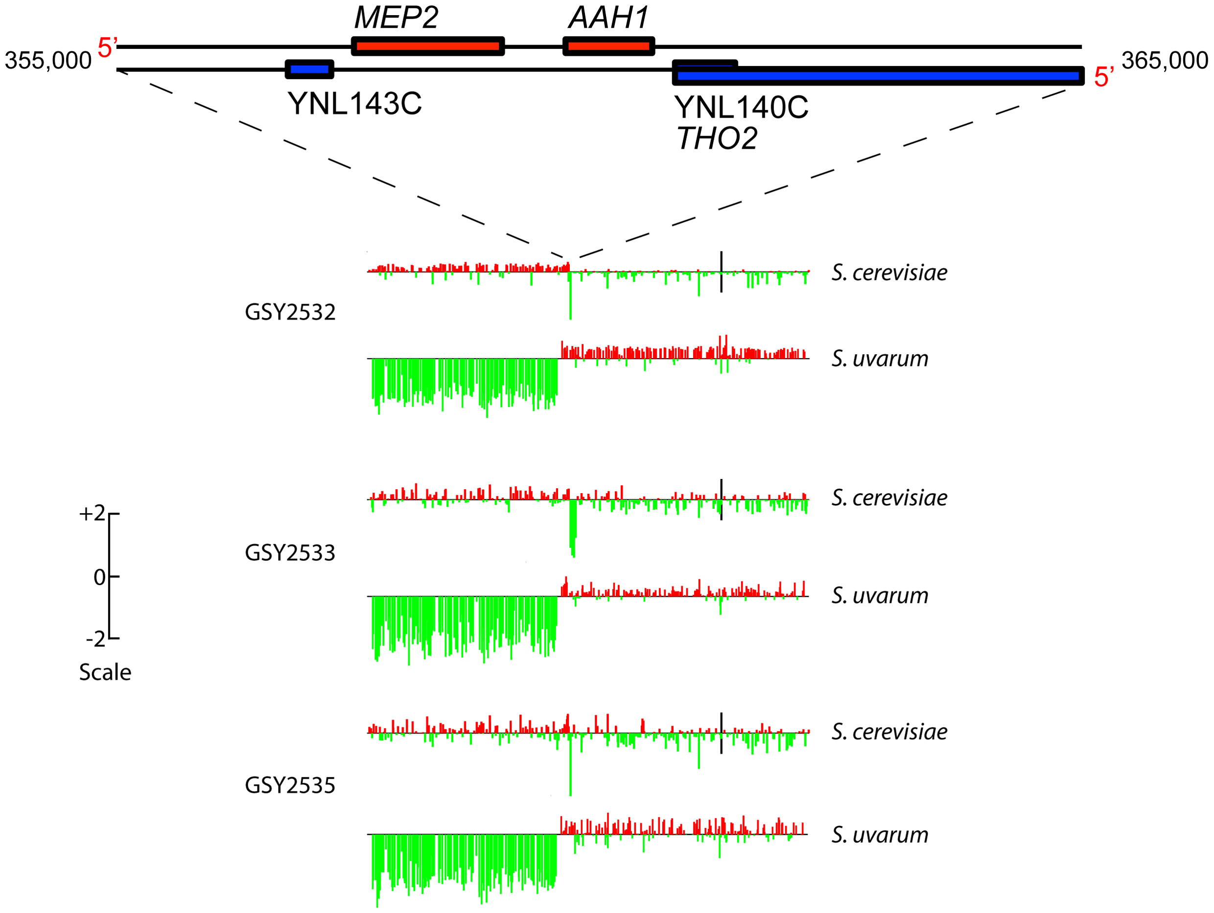 Array-Comparative Genome Hybridization (aCGH) caryoscopes of Chromosome 14 rearrangement seen in three independently-evolved F1 hybrids.