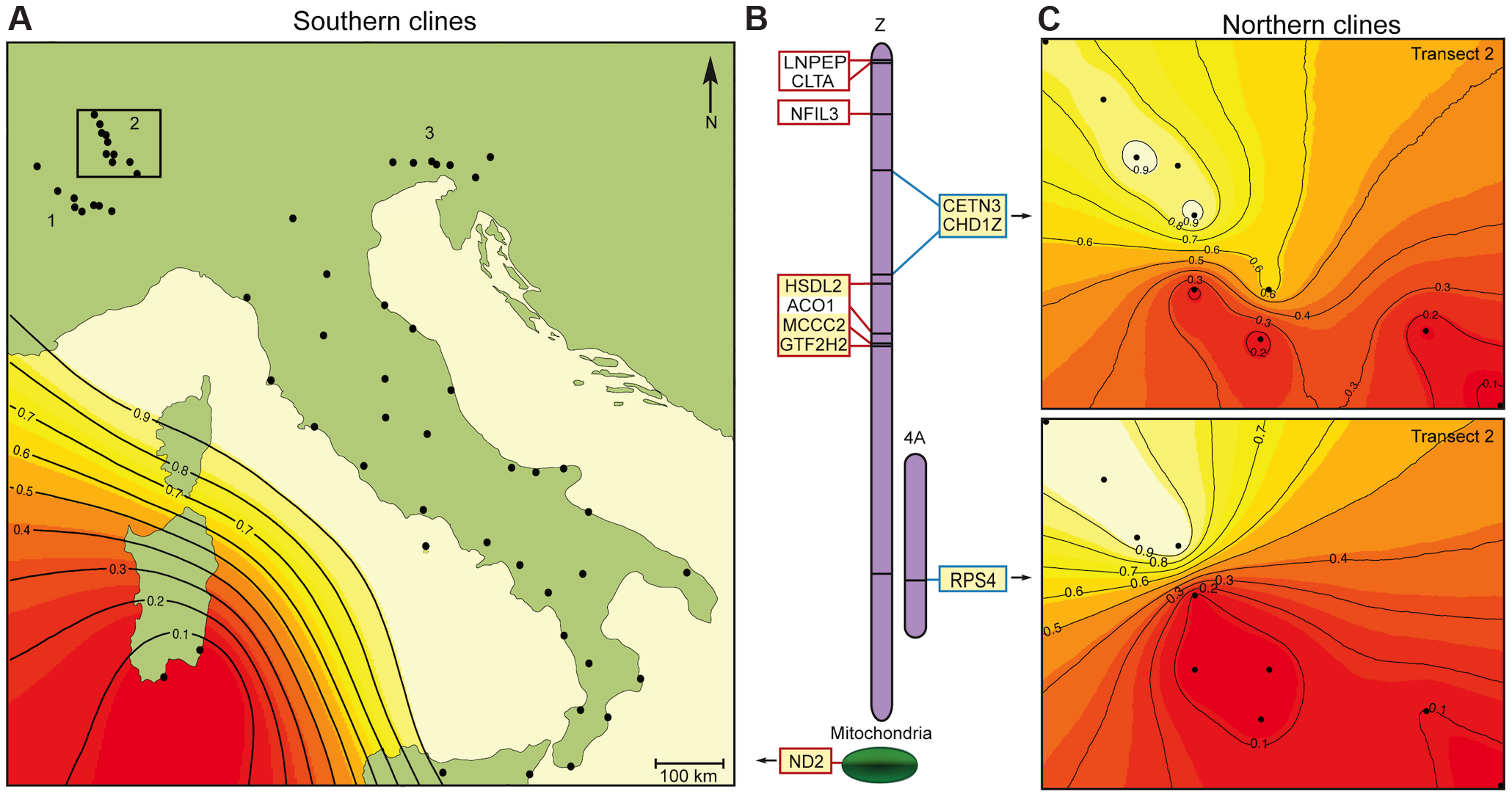 Genetic incompatibilities between the hybrid Italian sparrow and its parent species.