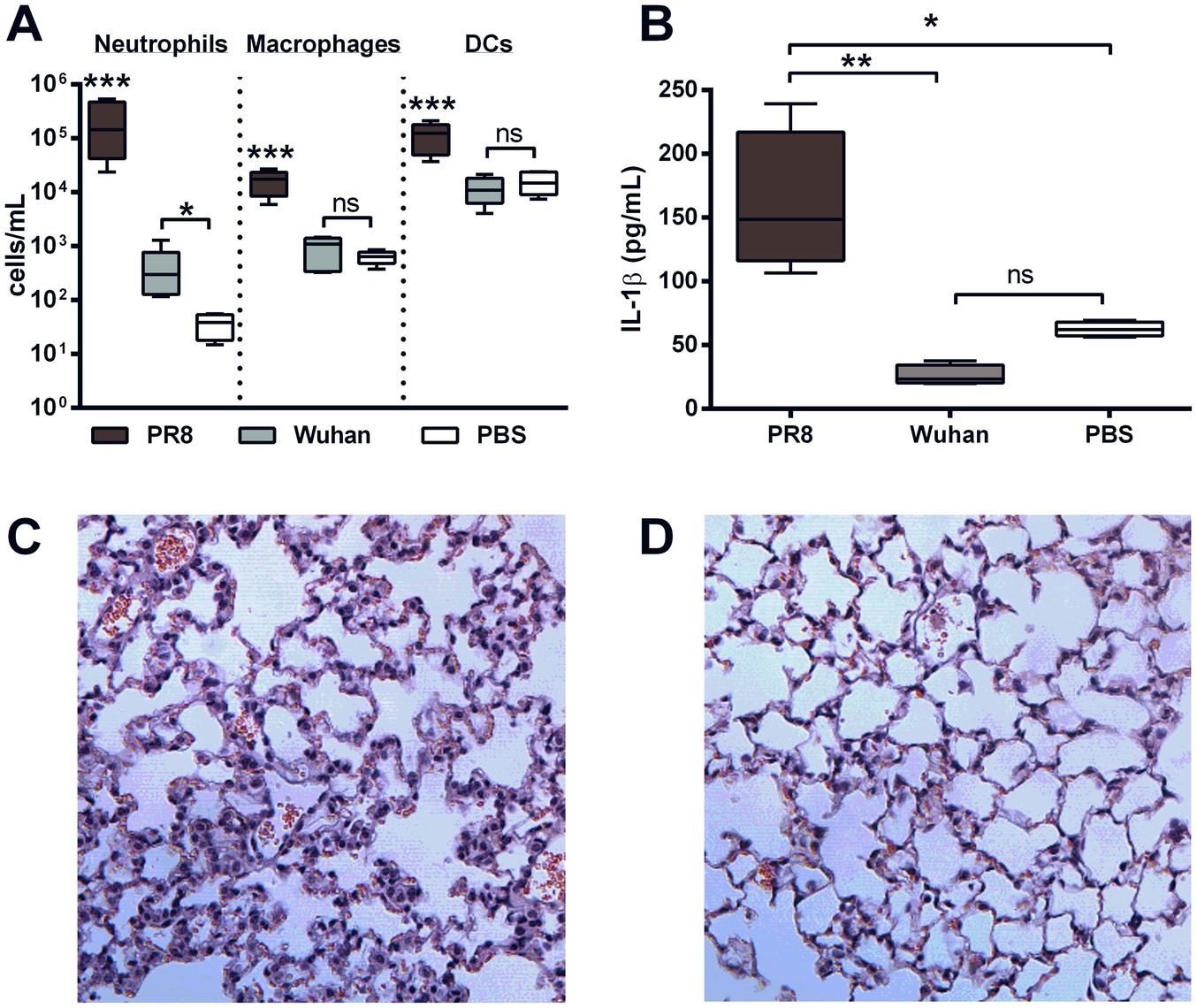 PB1-F2 peptide derived from pathogenic IAV increases cellularity and IL-1β secretion in the lungs.
