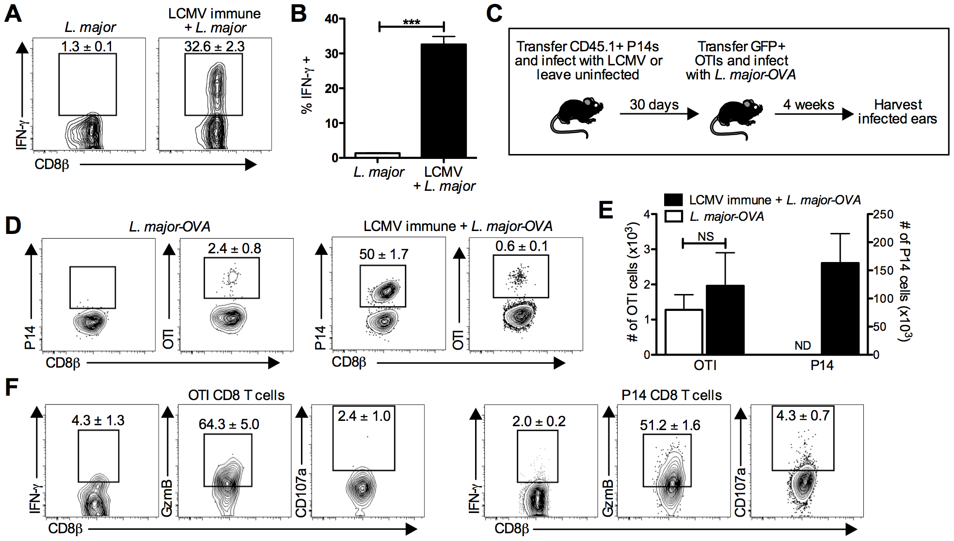 LCMV specific CD8 T cells are present in the leishmanial lesion and express gzmB but low levels of IFN-γ.