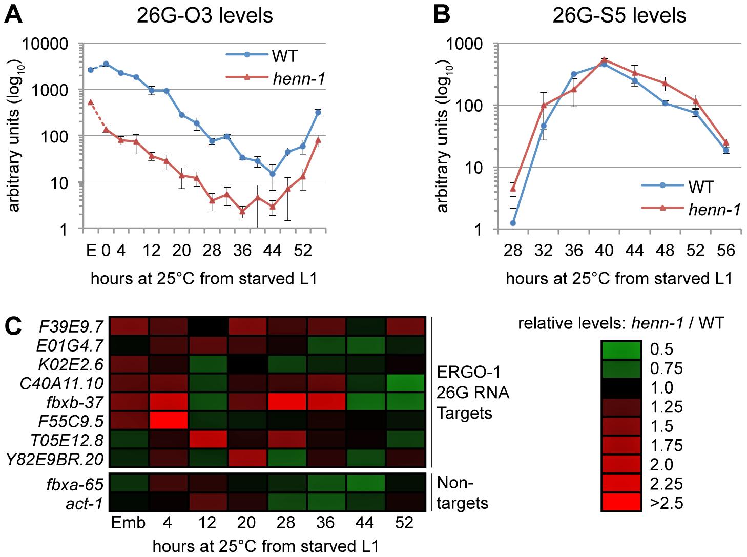 HEN1 Stabilizes ERGO-1 Class, but Not ALG-3/ALG-4 Class, 26G RNAs.