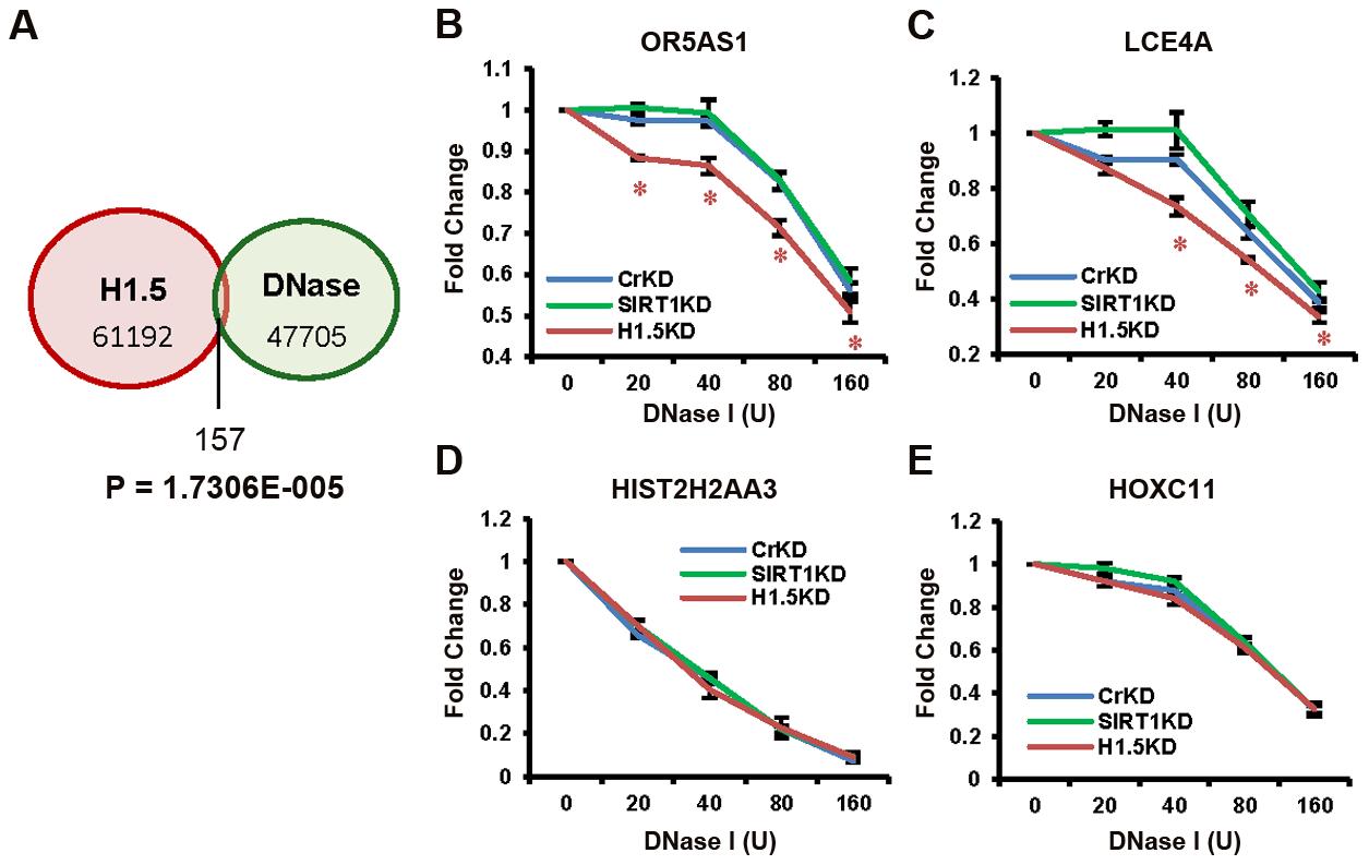 H1.5 knockdown increases DNase I sensitivity at target regions.