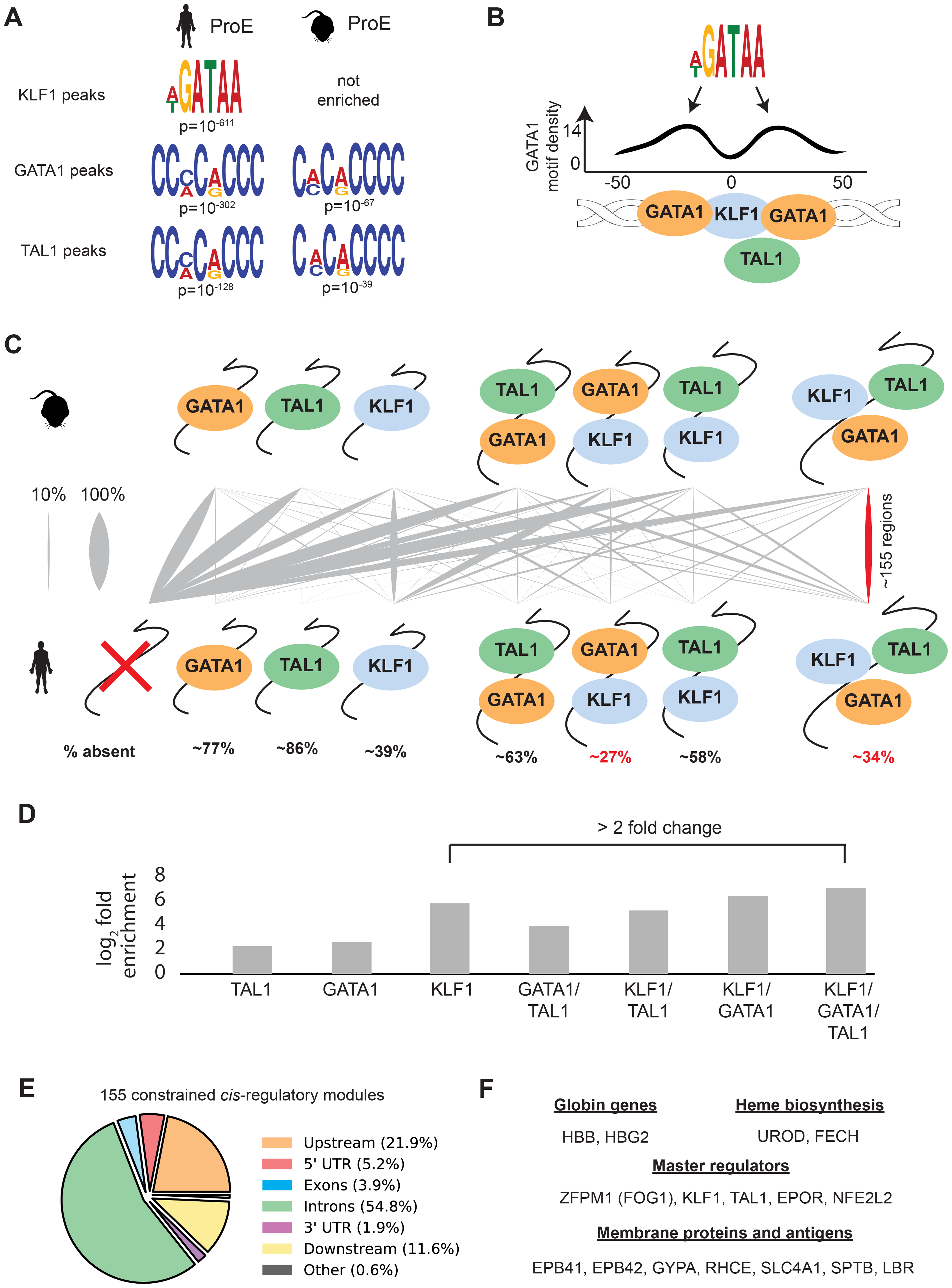 Combinatorial occupancy patterns of transcription factors are strongly conserved.