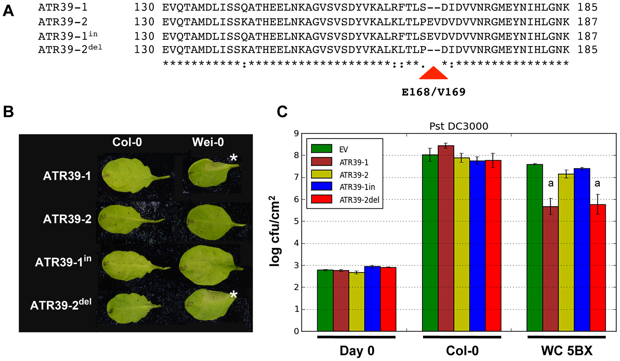 Amino acids E168/V169 abolish recognition of ATR39.