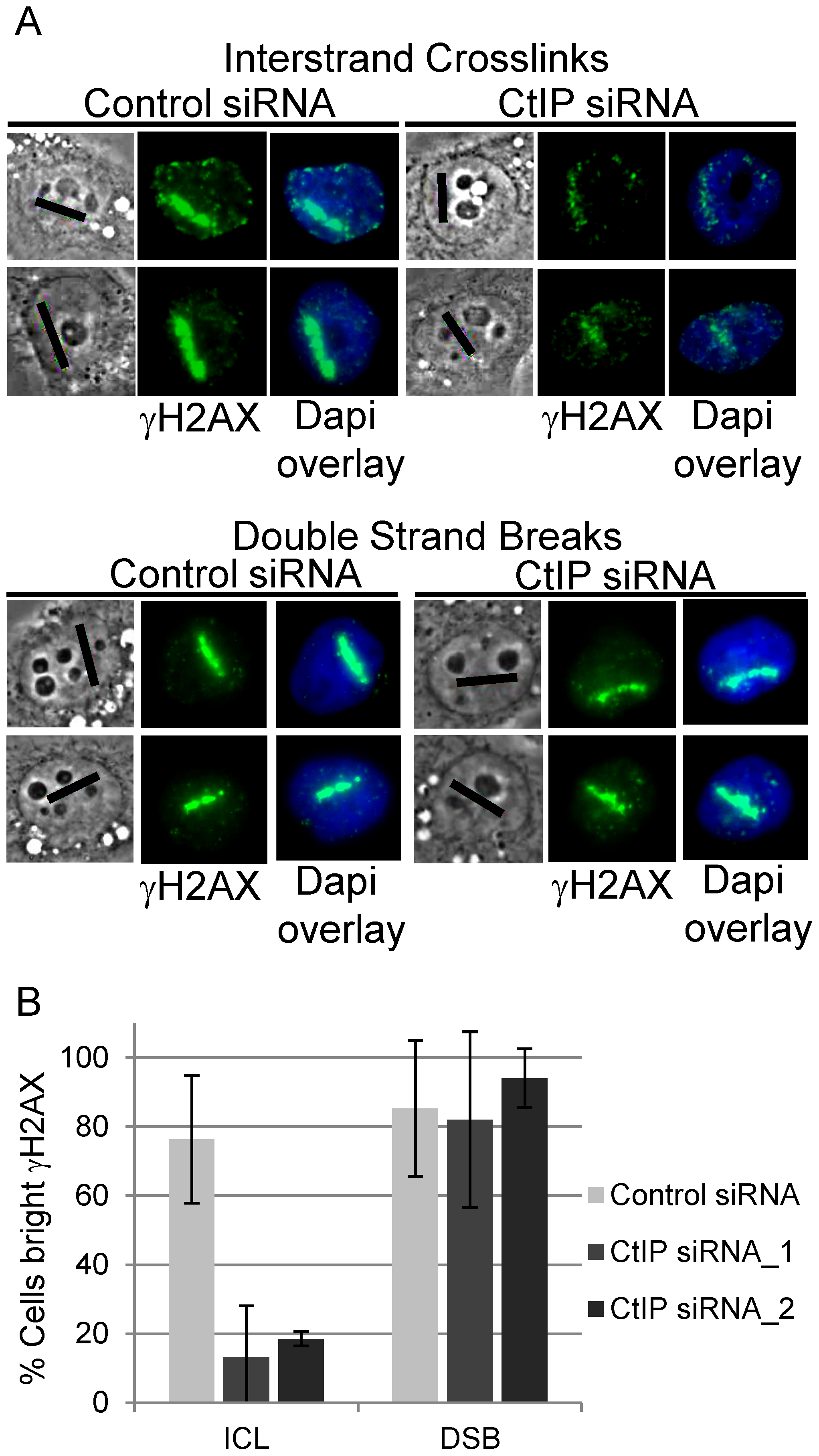 CtIP depletion reduces γH2AX at ICLs but not at DSBs.