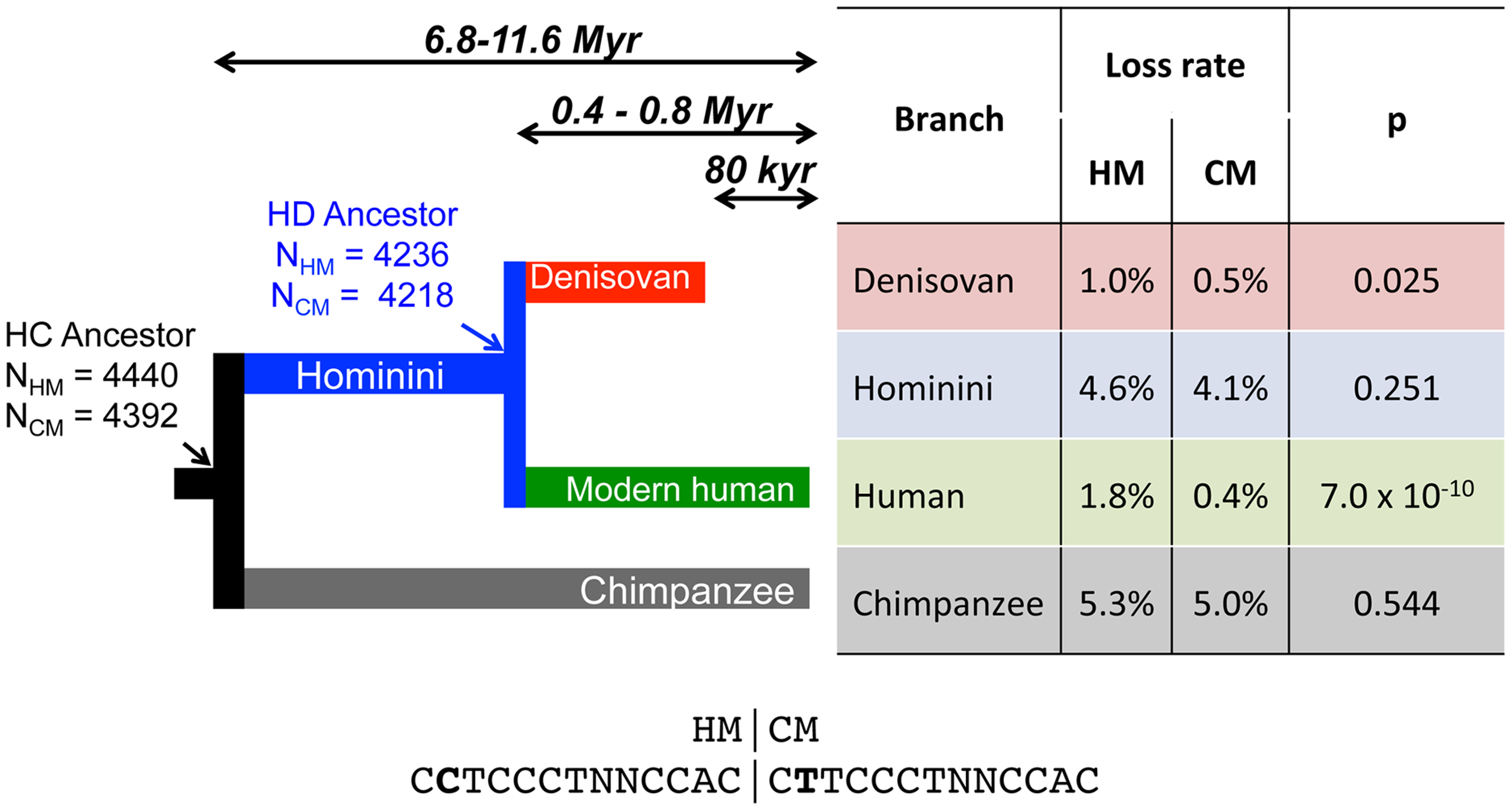 Differential loss of HM motifs across recent human history.