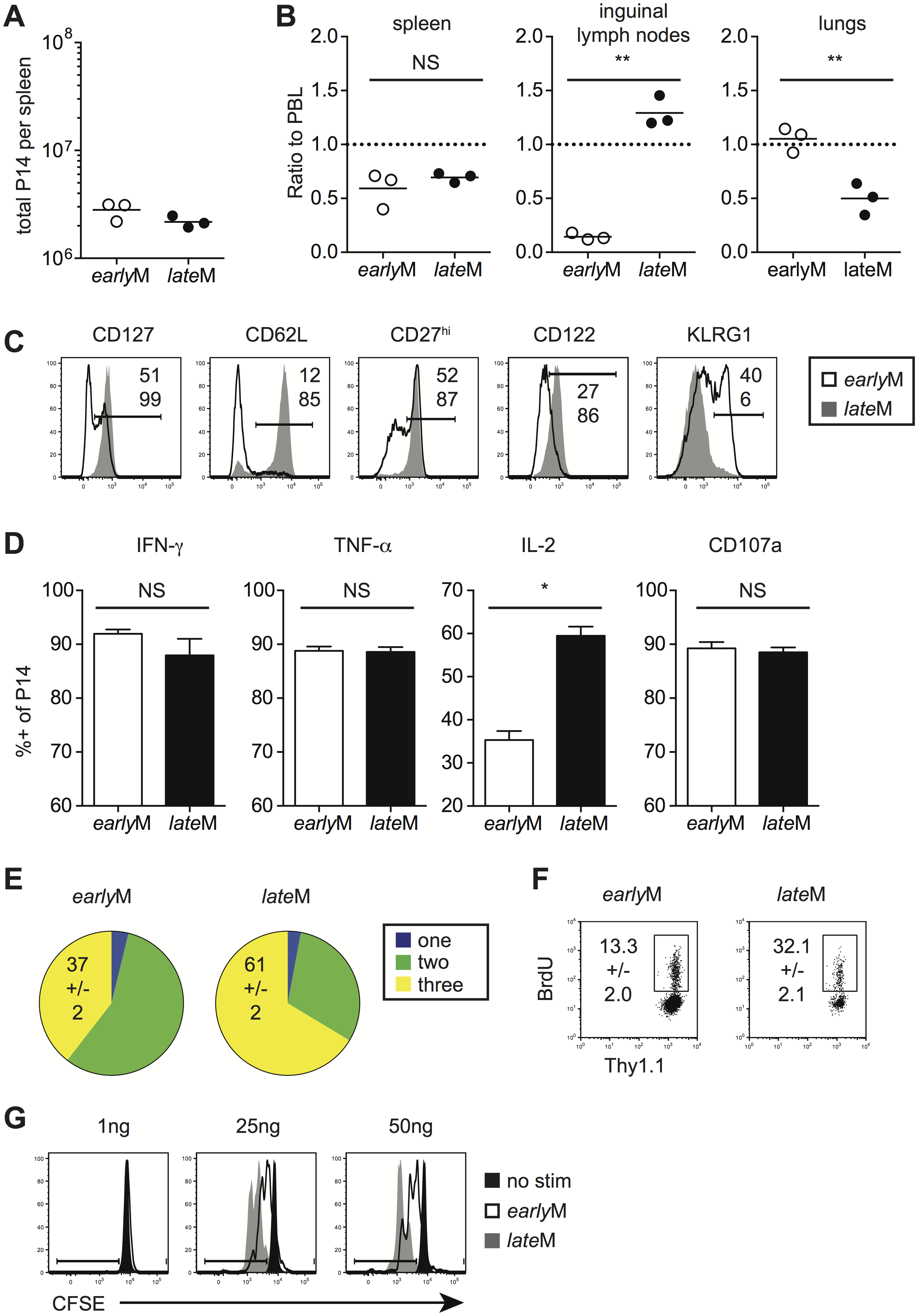 Localization, phenotype, and function of memory CD8 T cells changes with time after infection.