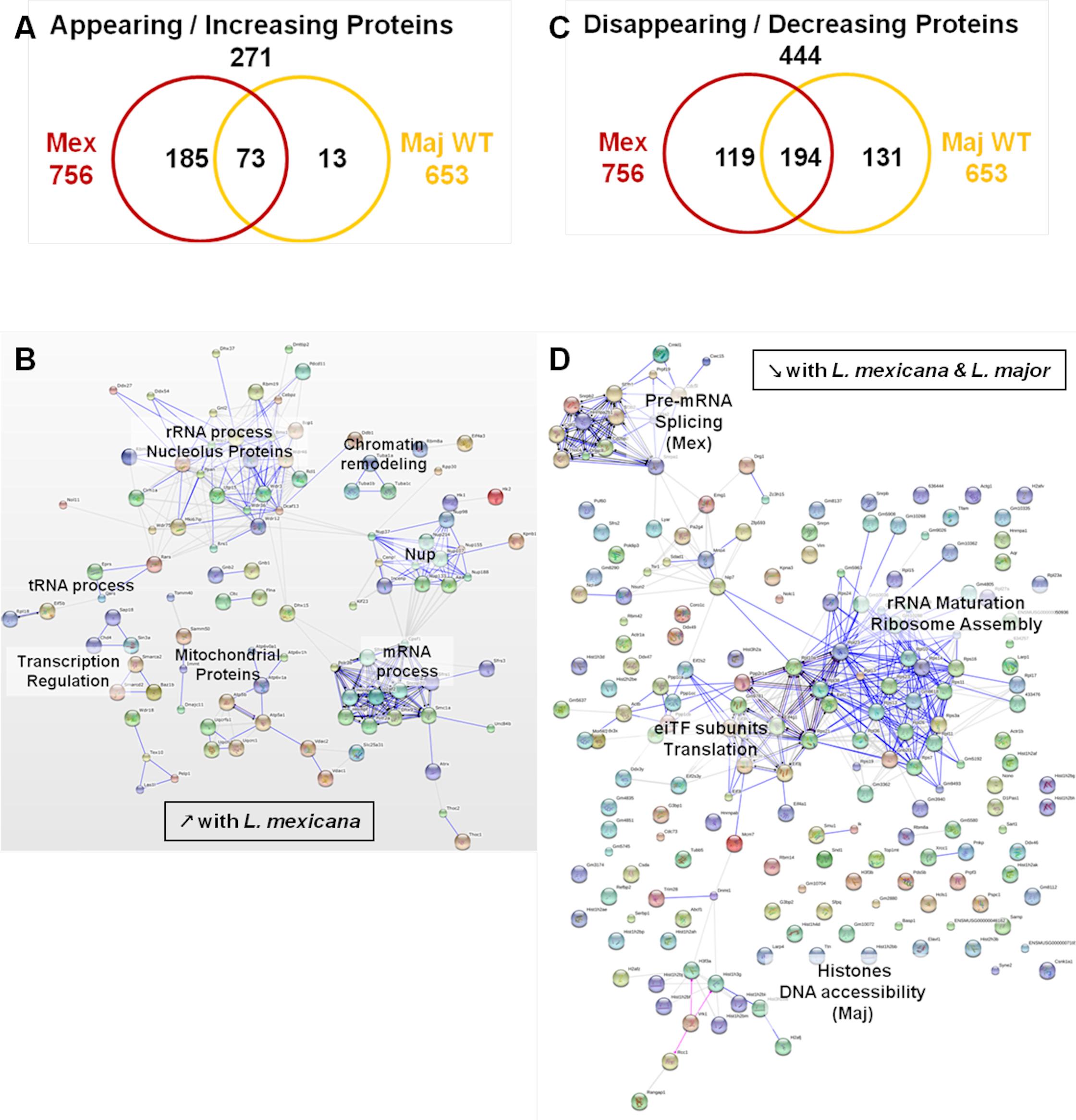 Comparative proteomic analysis of macrophage nuclei after infection with <i>L</i>. <i>major WT</i> or <i>L</i>. <i>mexicana</i>.