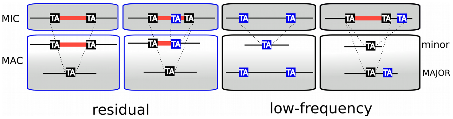 TA-indels are produced by IES excision errors.