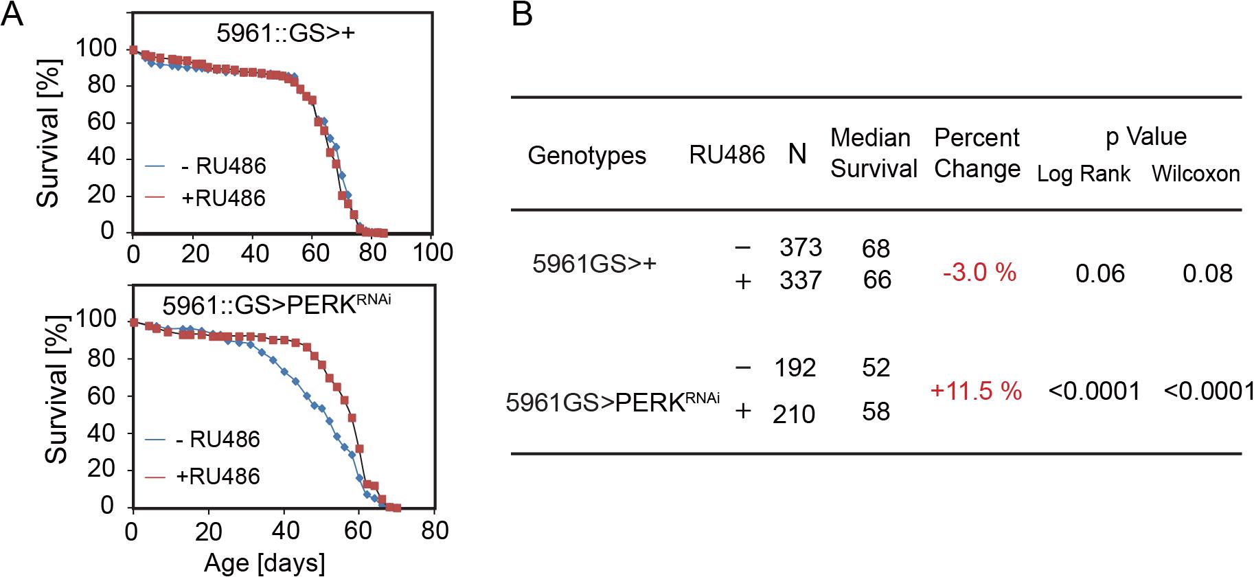 Knockdown of PERK in ISCs extends lifespan in flies.
