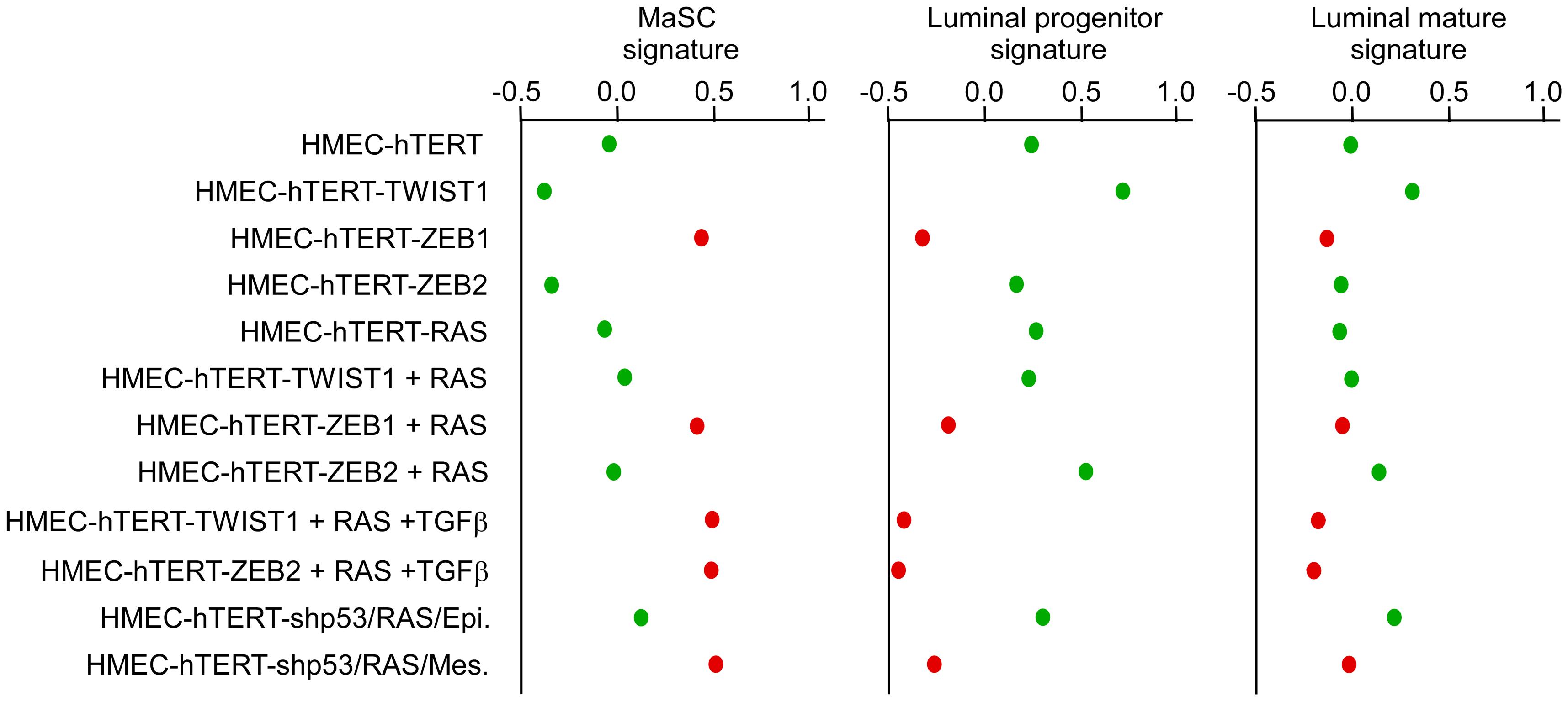 Expression of EMT–inducing transcription factors triggers a dedifferentiation of HMEC cells.