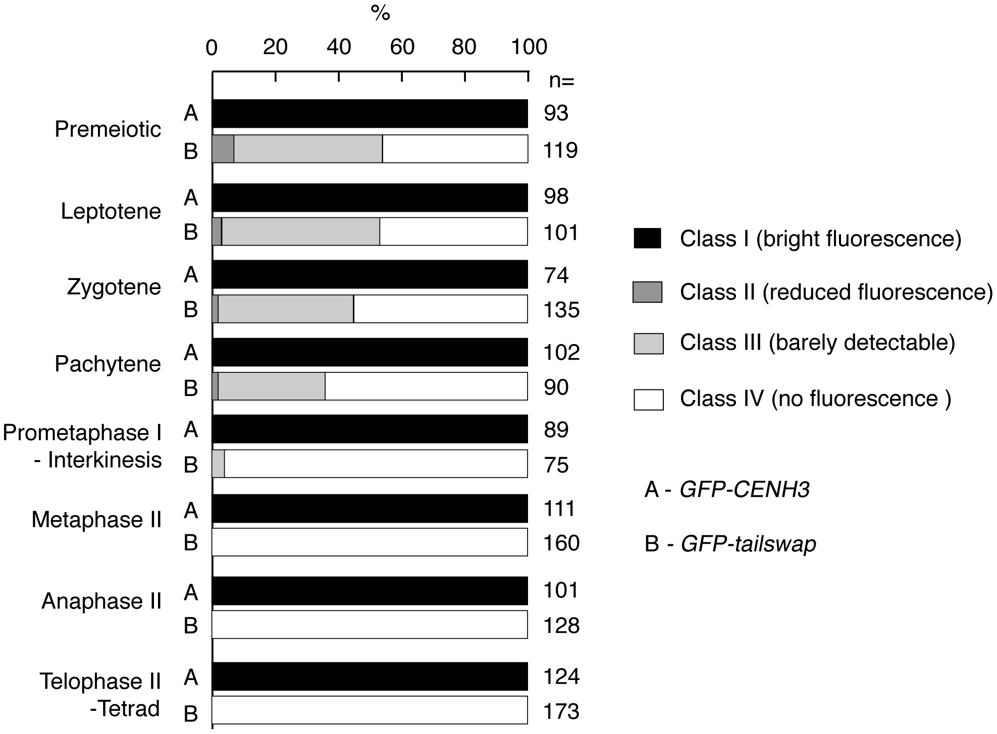 Percentage of <i>GFP-CENH3</i> and <i>GFP-tailswap</i> meiocytes showing particular classes of GFP fluorescence at kinetochores.