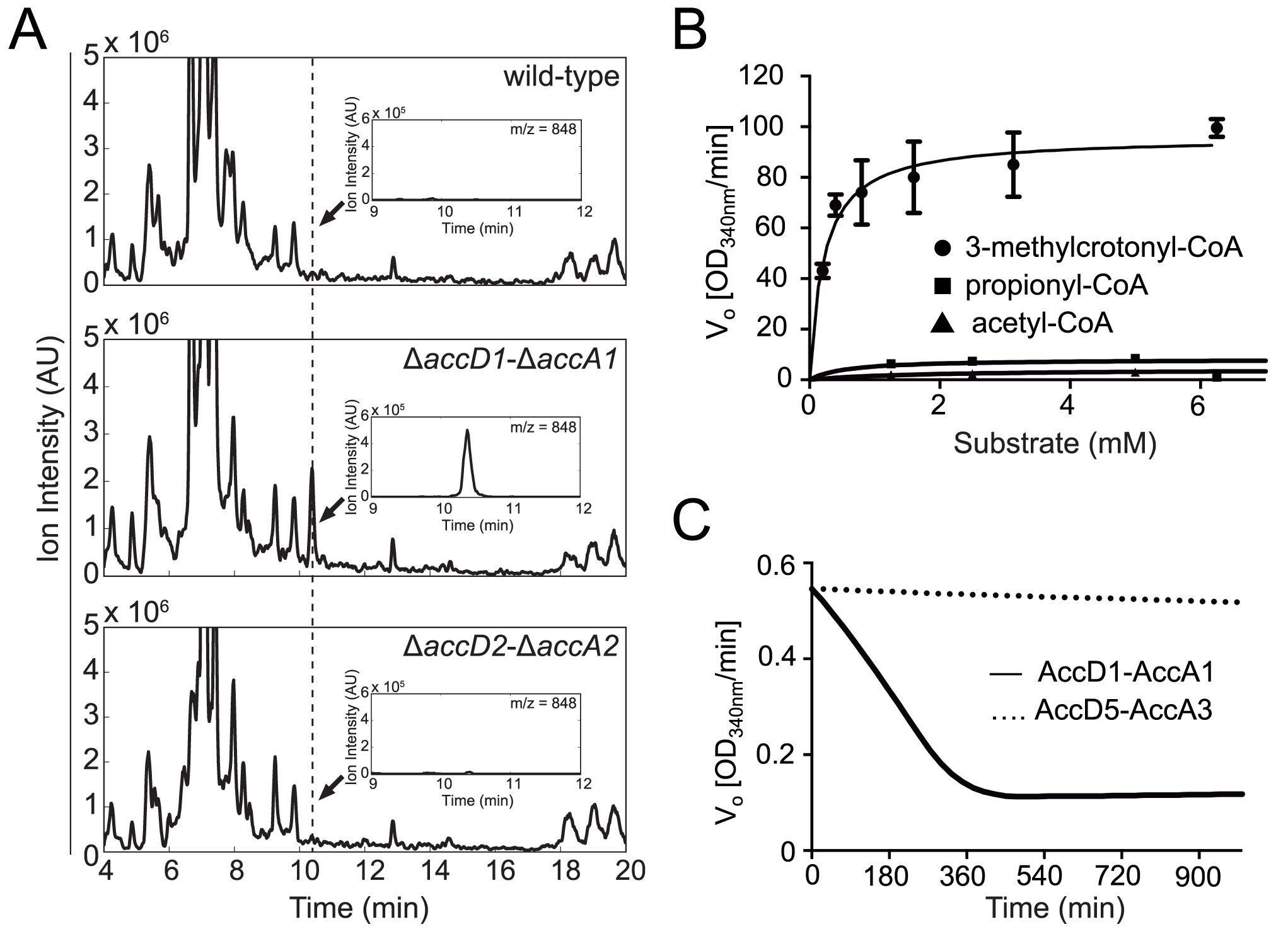 Identification and biochemical characterization of the AccD1-AccA1 substrate 3-methylcrotonyl-CoA.