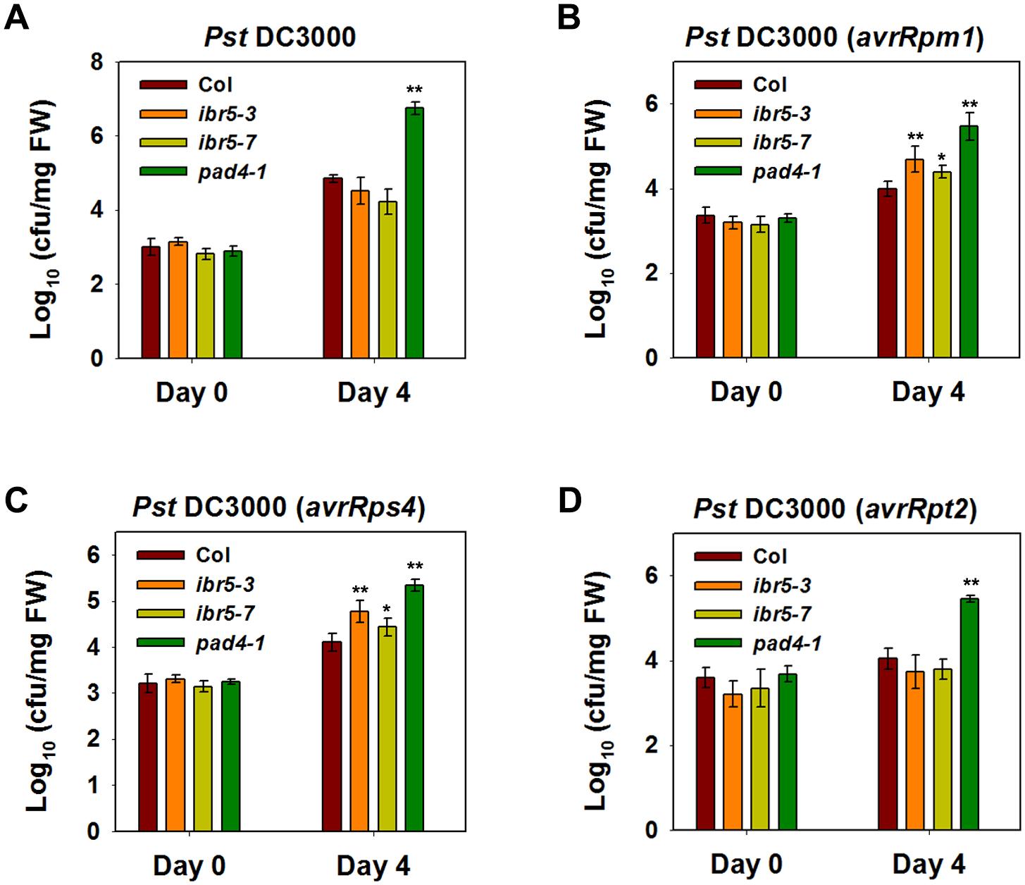 Pathogen resistance analysis of <i>ibr5</i> mutants.
