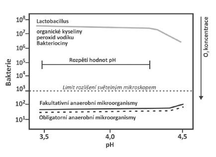 Mikrobiální osídlení pochvy při normálním pH