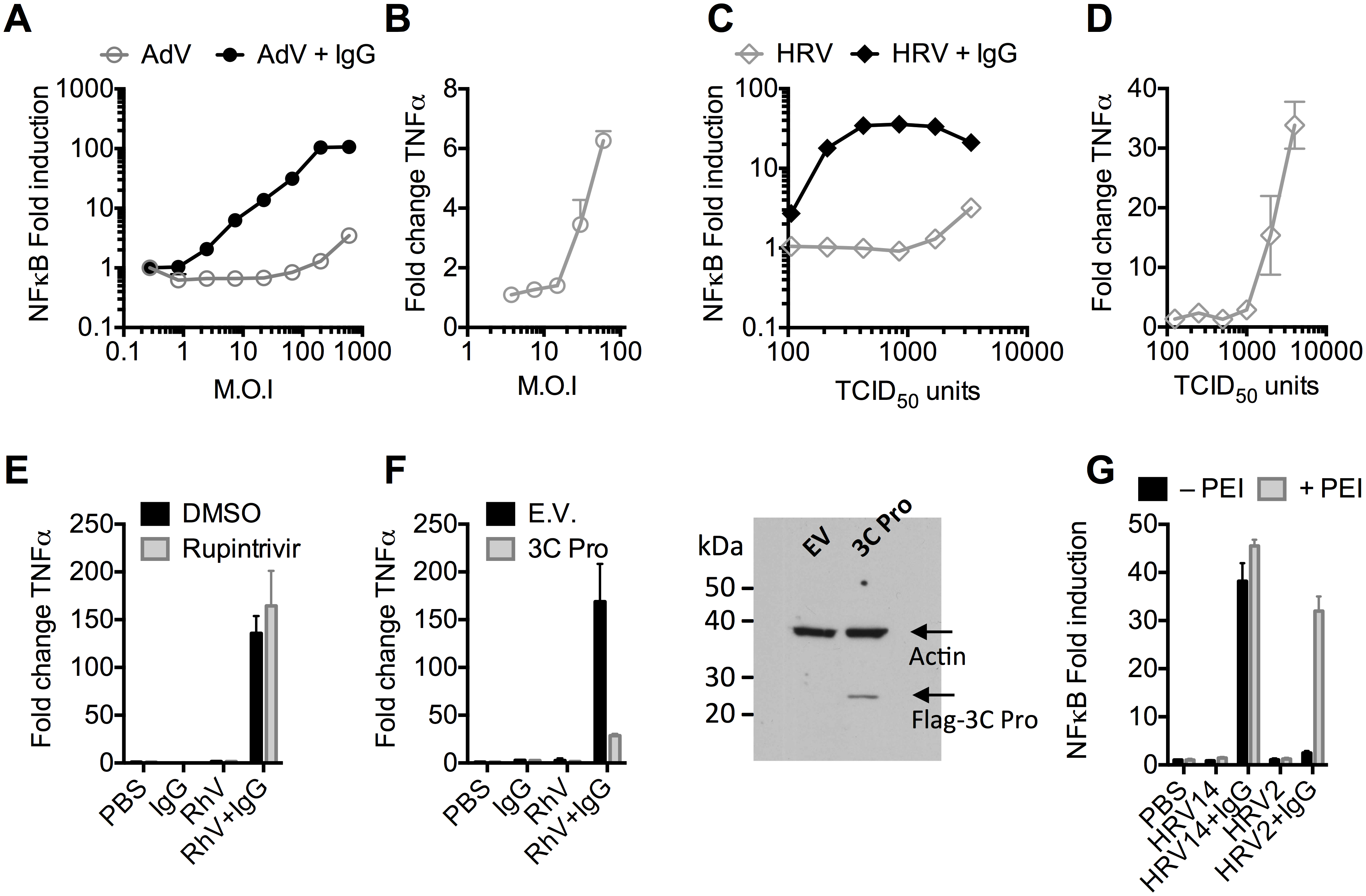 Antibodies potentiate immune sensing during adenovirus (AdV) or rhinovirus (HRV) infection.