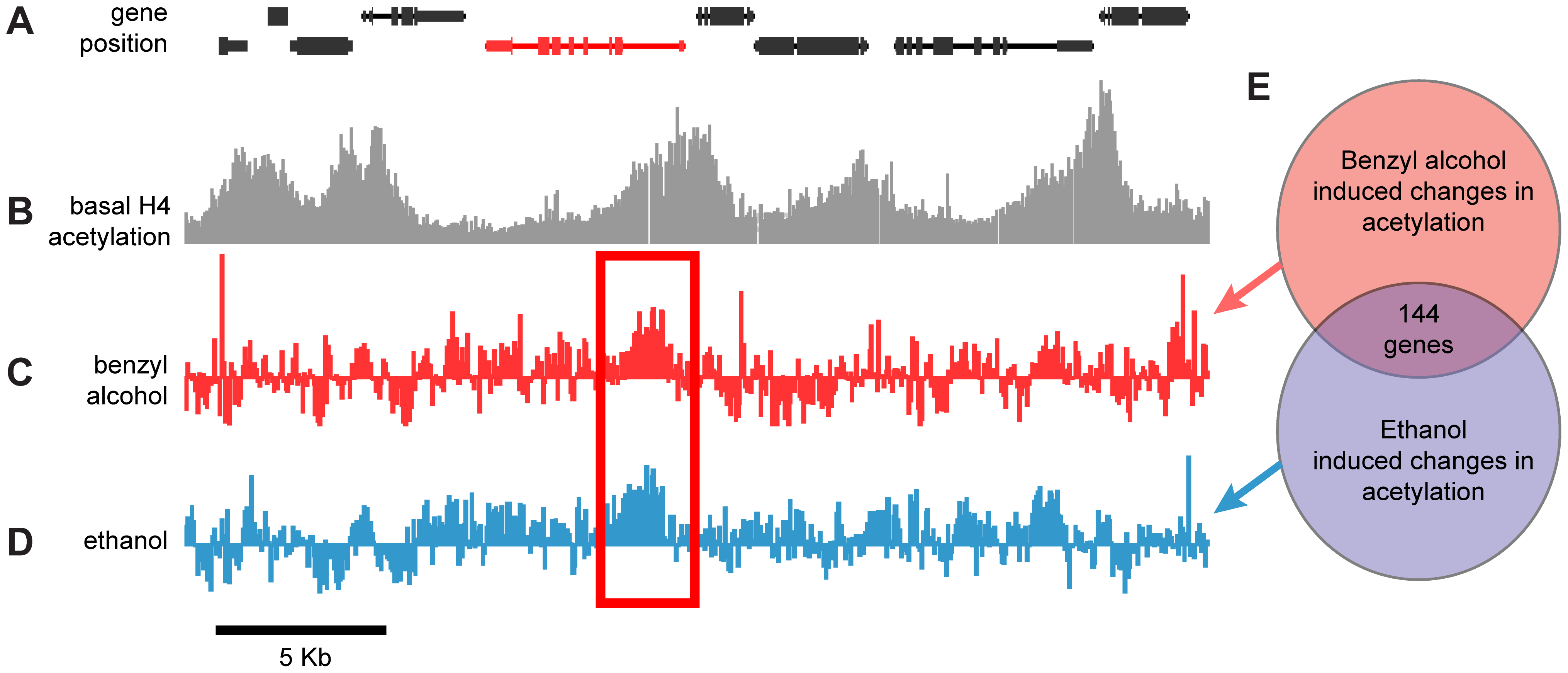 Genome-wide, drug-induced changes in H4 acetylation.