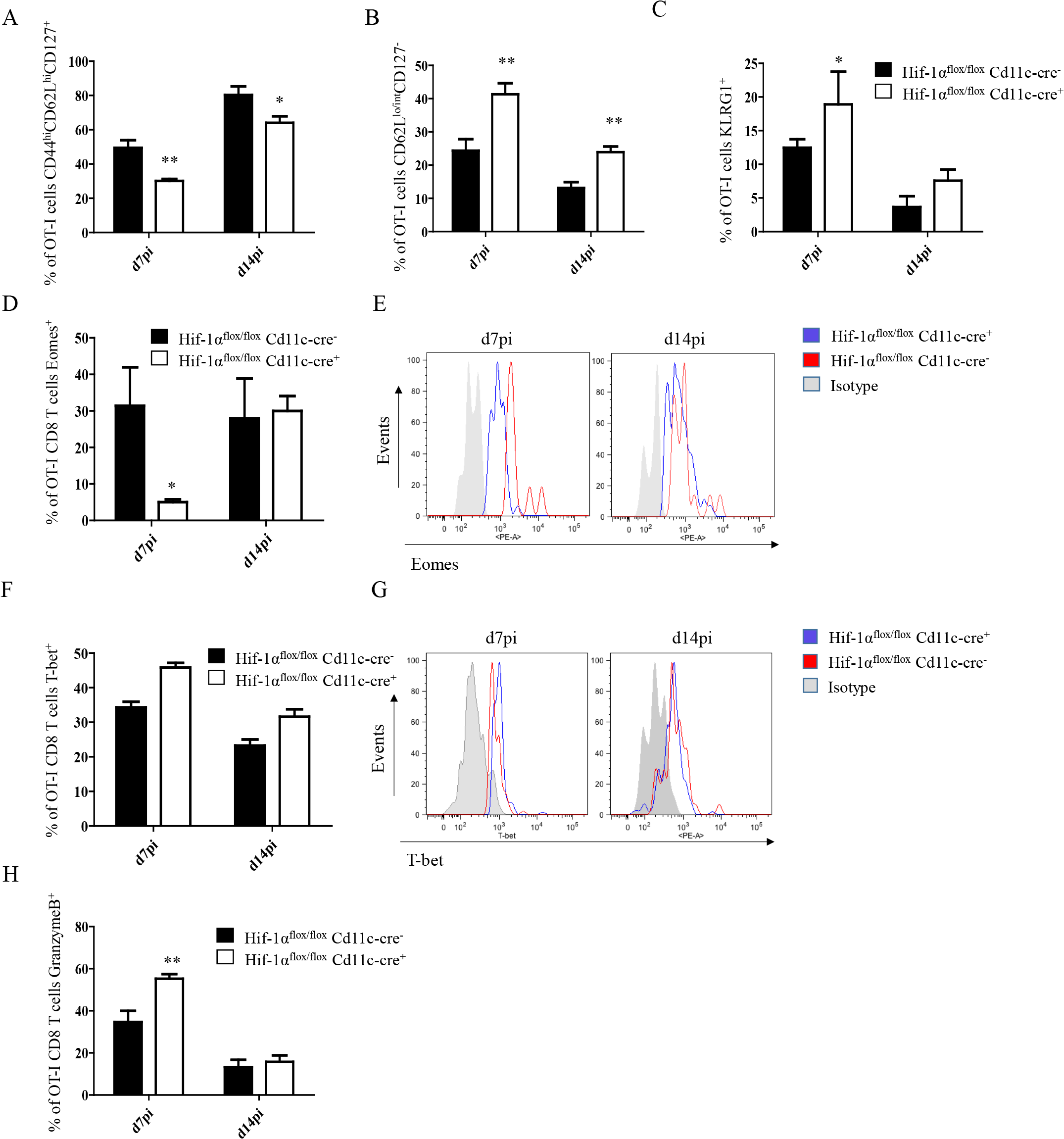 Depletion of HIF1α in CD11c<sup>+</sup> cells induces more SLECs during the acute phase of <i>L</i>. <i>donovani</i> infection.
