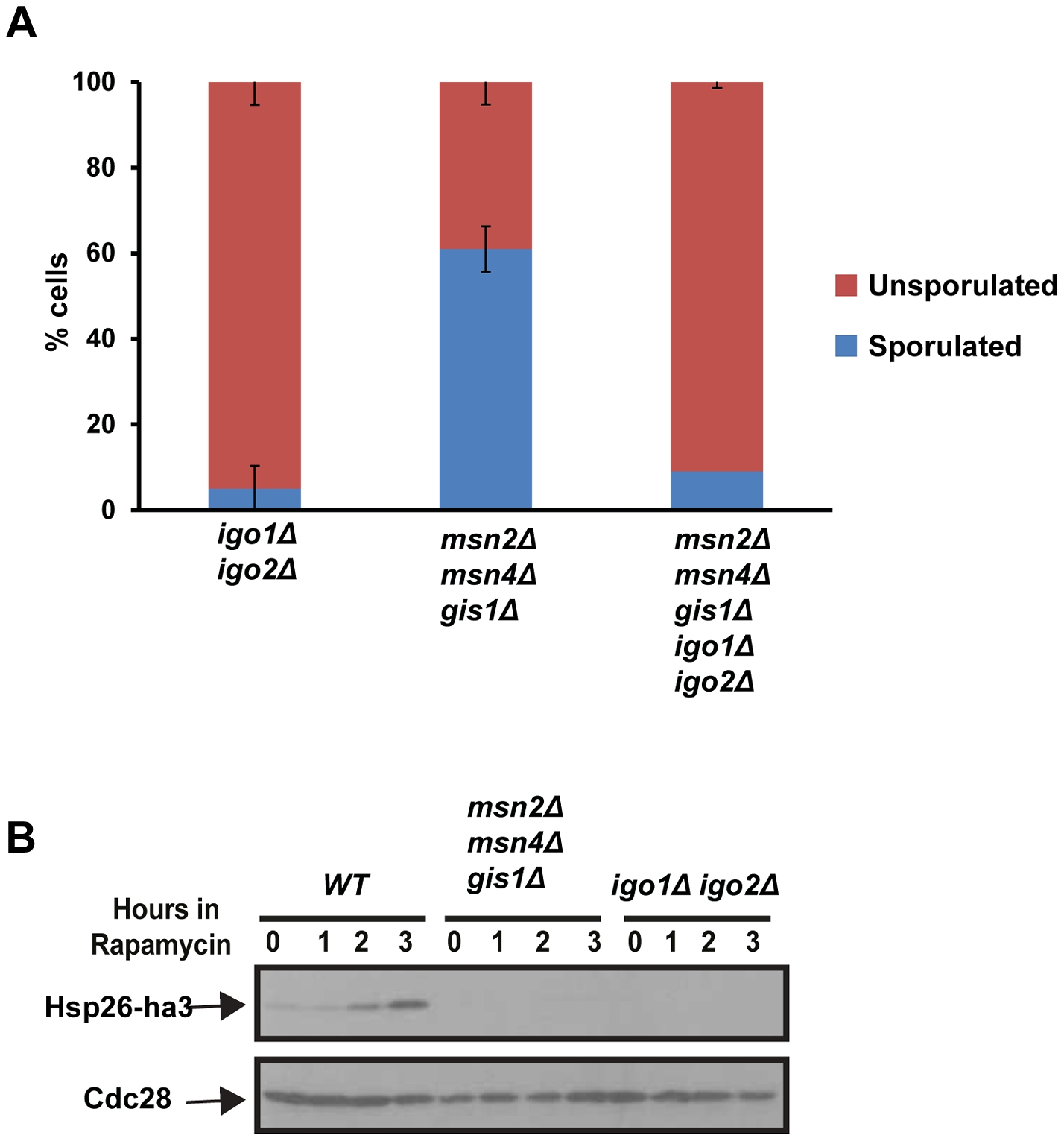 The G<sub>0</sub>-specific transcription factors Msn2, Msn4 and Gis1 are not required for entry into gametogenesis.