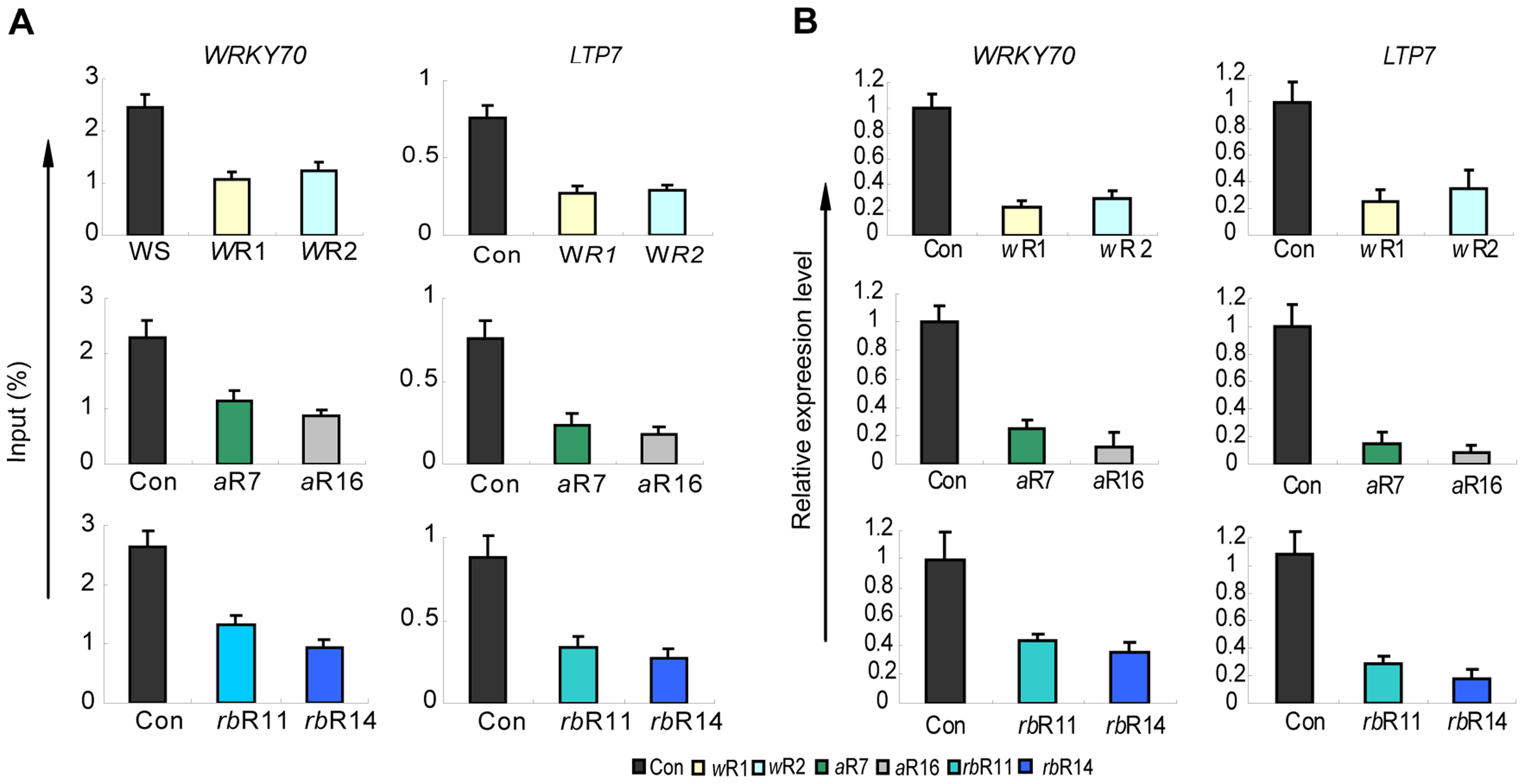 H3K4me3 and mRNA levels of two ATX1-regulated genes in the AtWRD5, or AtASH2, or At5-deficient lines.