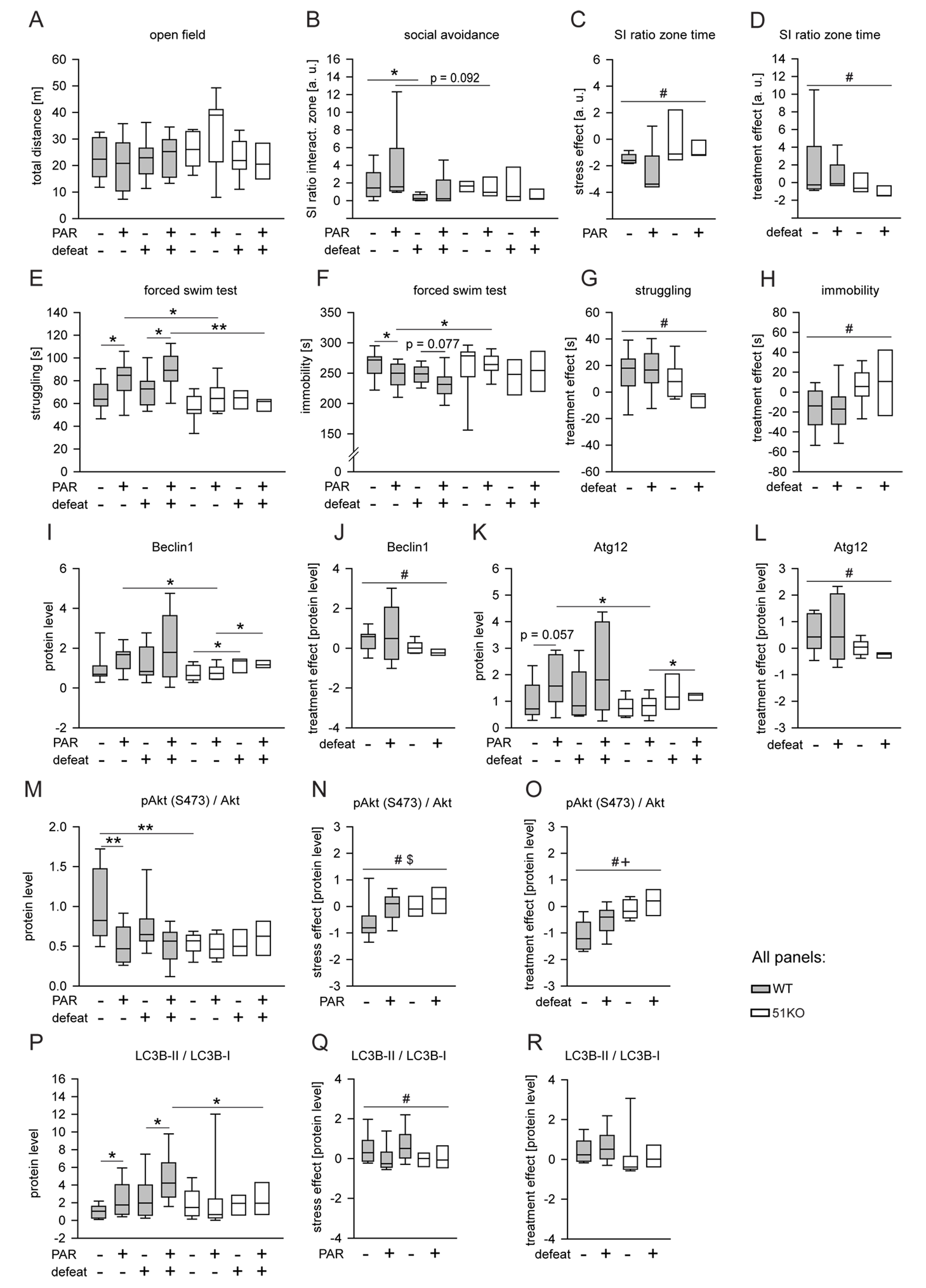 FKBP51 is required for the chronic effects of PAR on behavior and autophagic pathways.